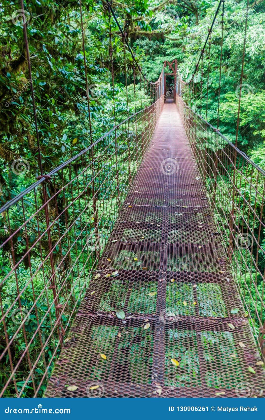 吊桥在Reserva Biologica树丛Nuboso蒙泰韦尔德,科斯塔Ri云彩森林里