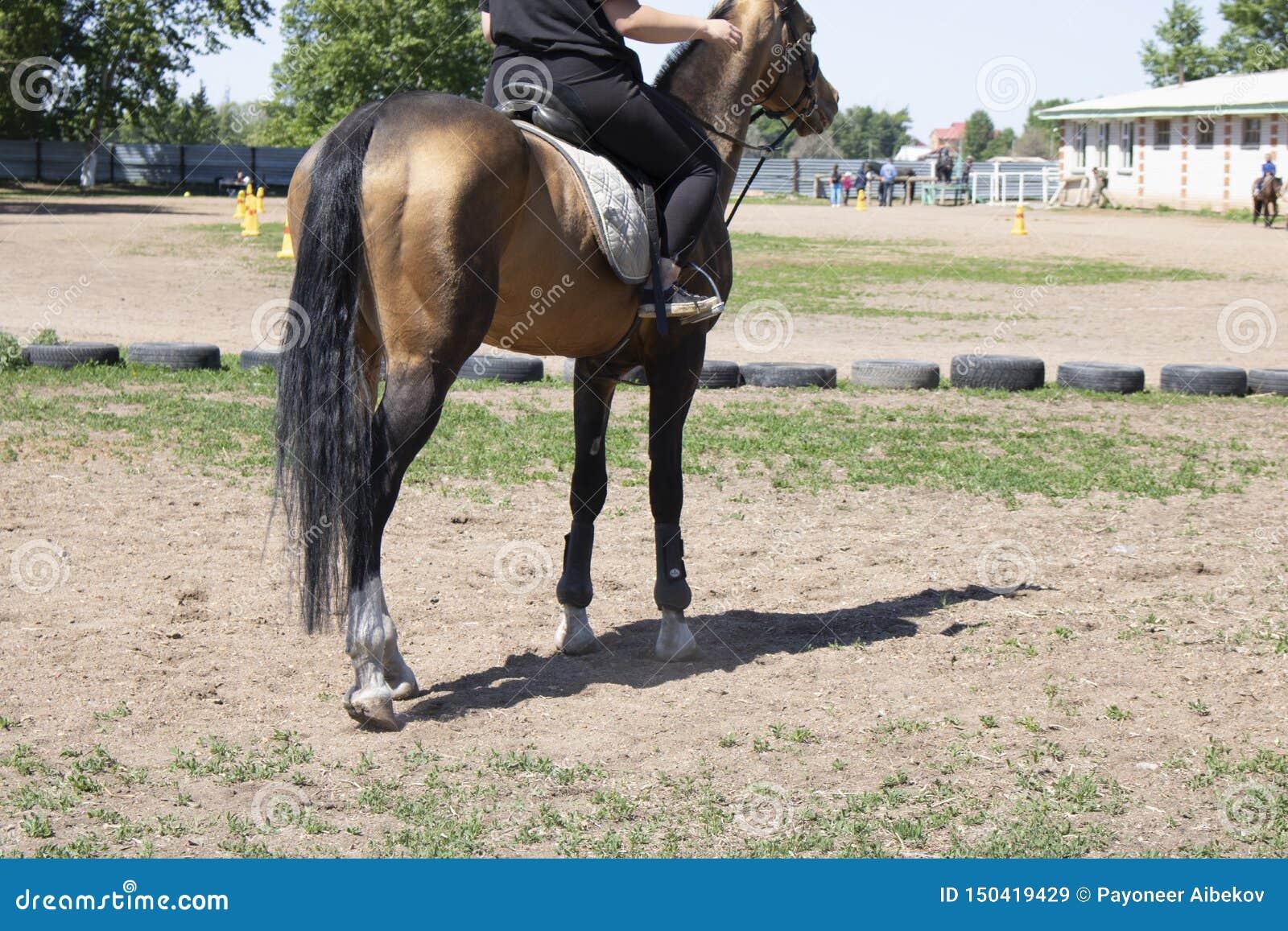 后侧方马,骑师乘坐公马、草和轮子