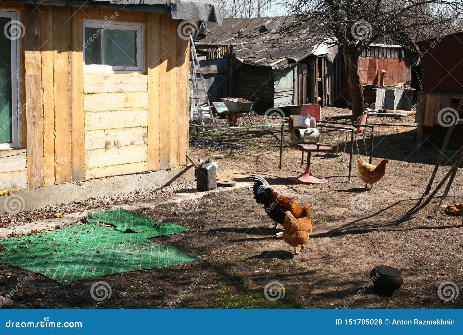 后院,腐朽的俄国村庄