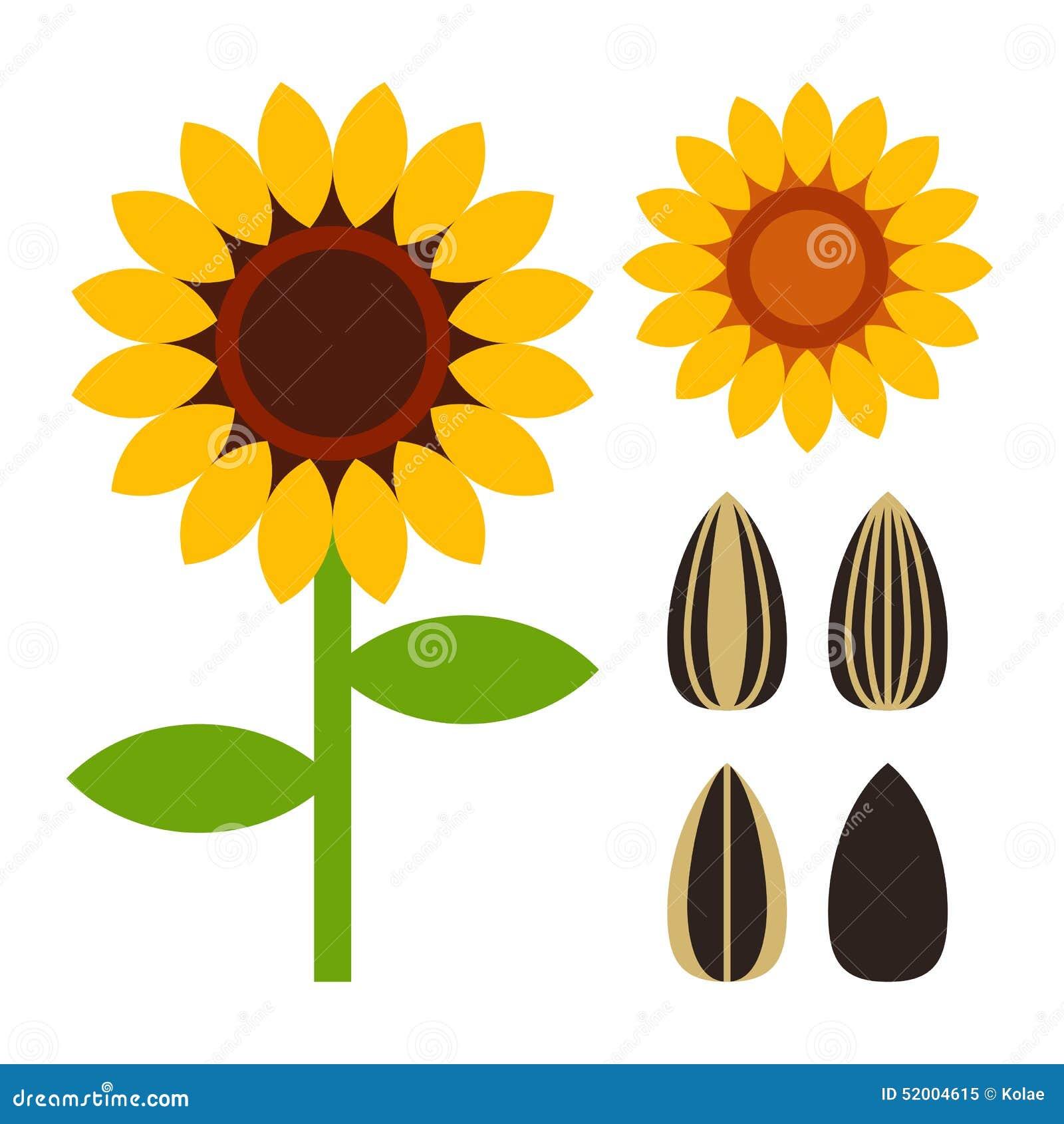 向日葵种子_在白色背景隔绝的向日葵和种子标志.