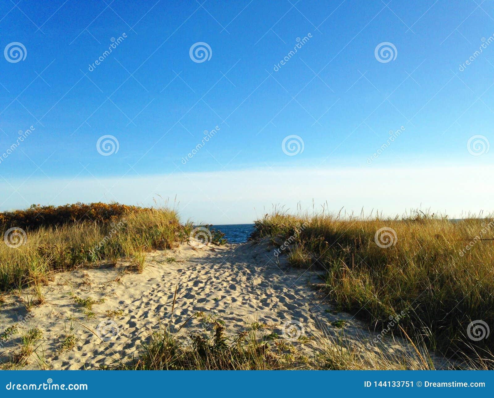 向海滩的道路