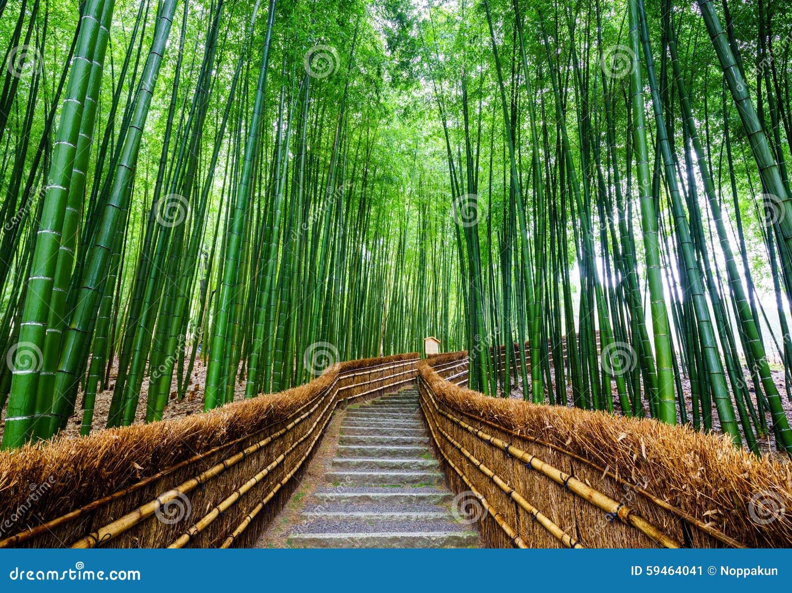 向竹森林, Arashiyama,京都,日本的道路