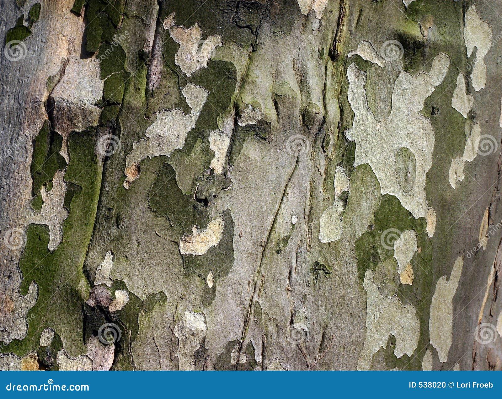 Download 吠声美国梧桐 库存照片. 图片 包括有 伪装, 树木繁茂, 树干, 详细资料, 美国梧桐, 工厂, 木头, 呈杂色 - 538020