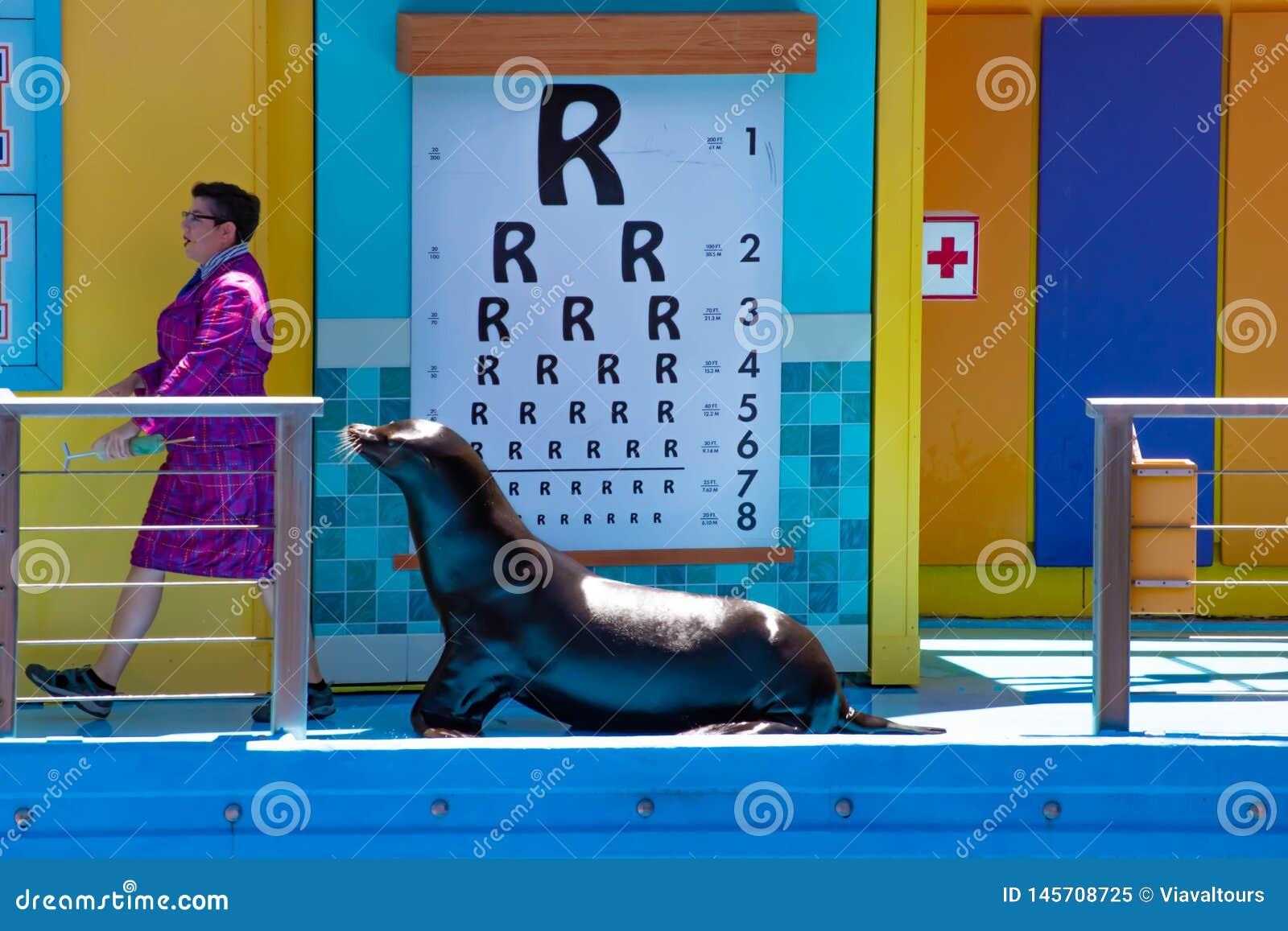 听殷勤地海狮的老师的海狮高新的类展示在Seaworld 1