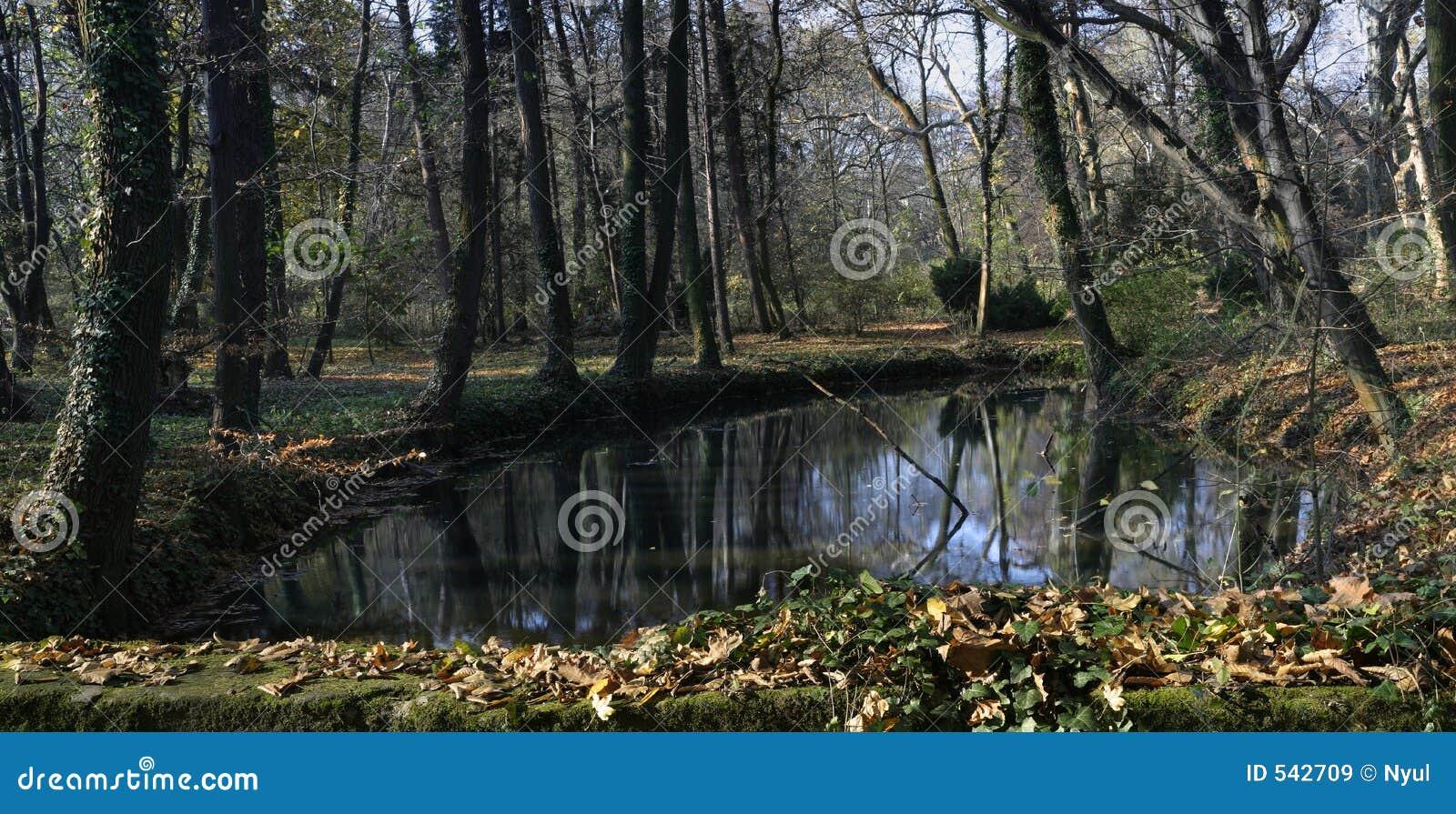 Download 和平 库存图片. 图片 包括有 结构树, 自治权, 重新创建, 森林, 青苔, 小河, 沈默, 静音, 路径 - 542709