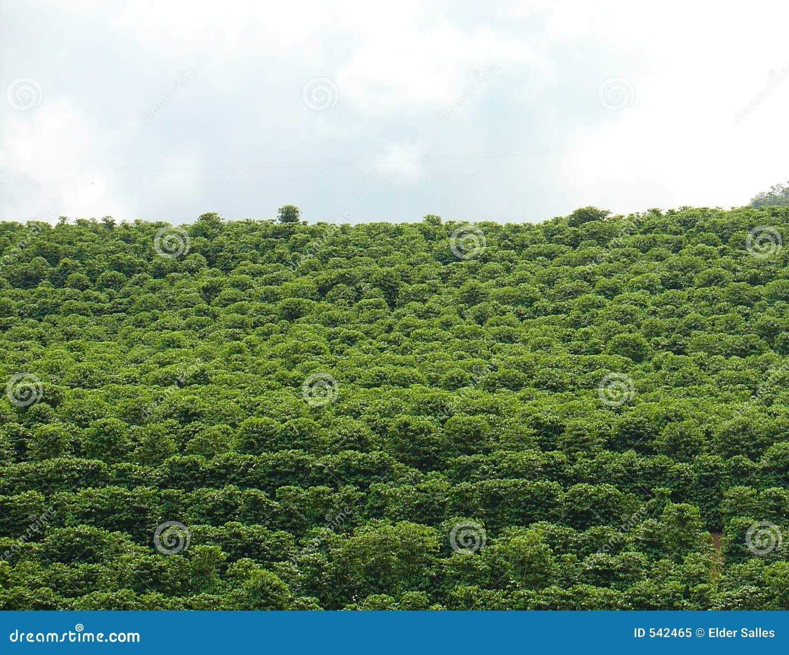 Download 咖啡种植园 库存图片. 图片 包括有 制动手, 文化, 自然, 黑暗, 农田, 咖啡, 问题的, 前面, 农场 - 542465