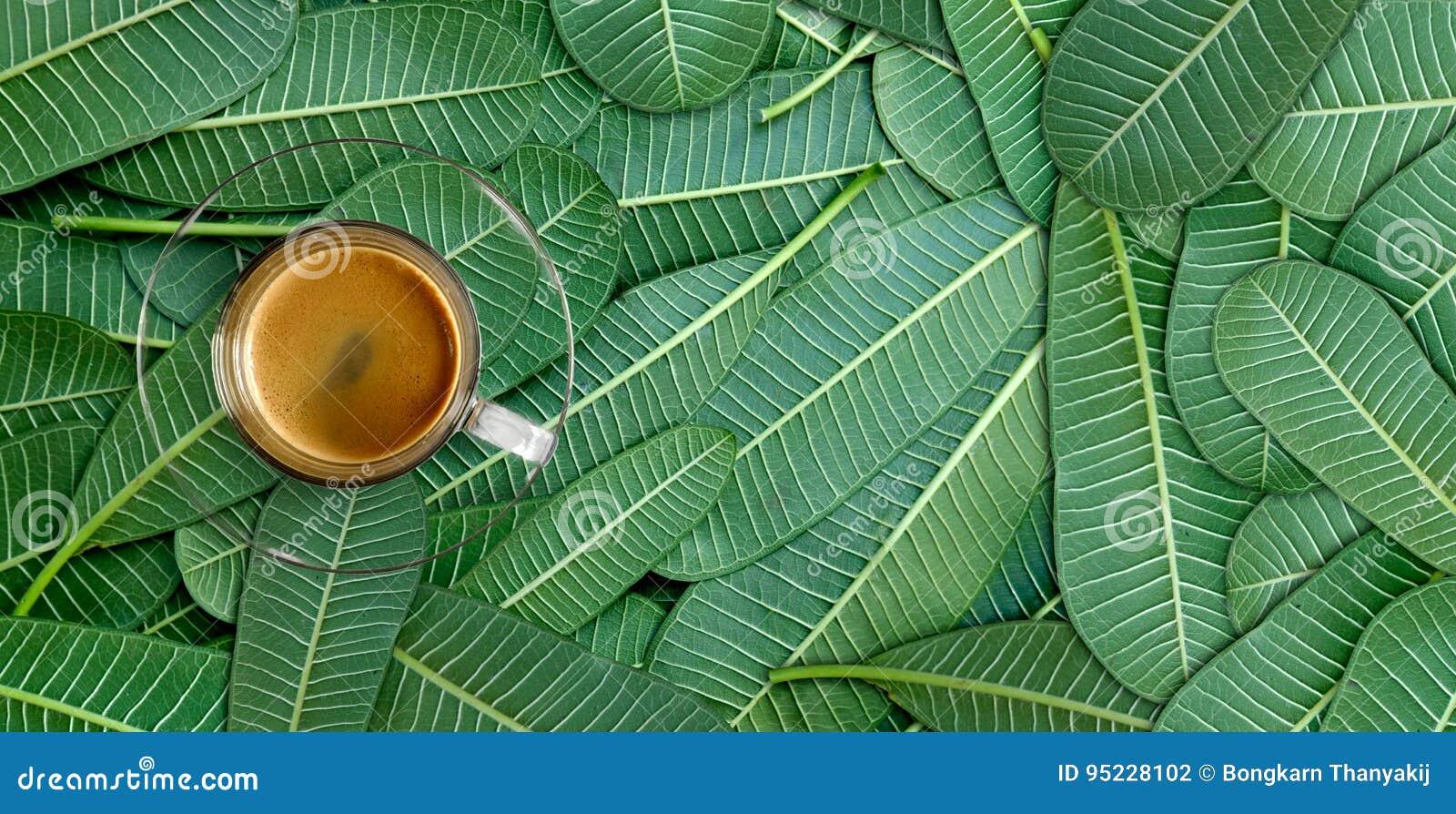 咖啡绿色叶子