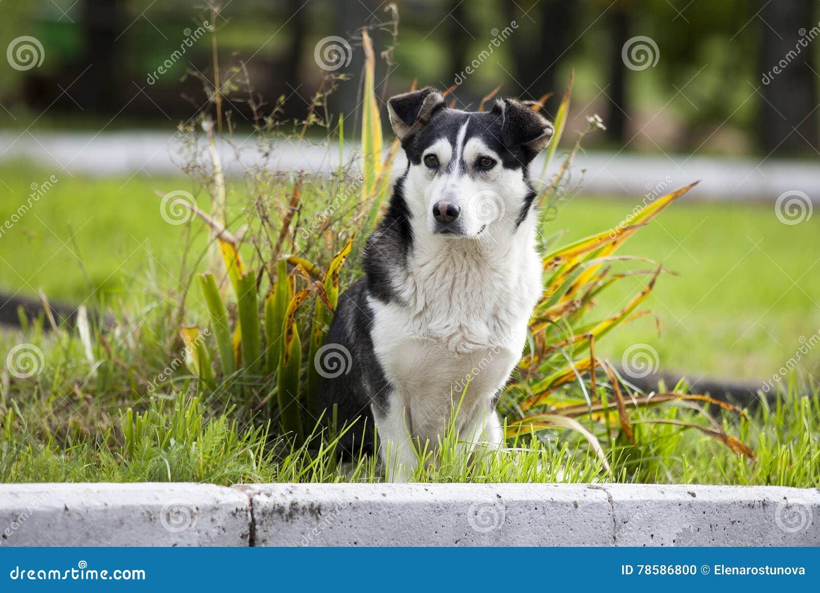 哀伤和无家可归的狗 在街道上放弃的一条哀伤和无家可归的狗