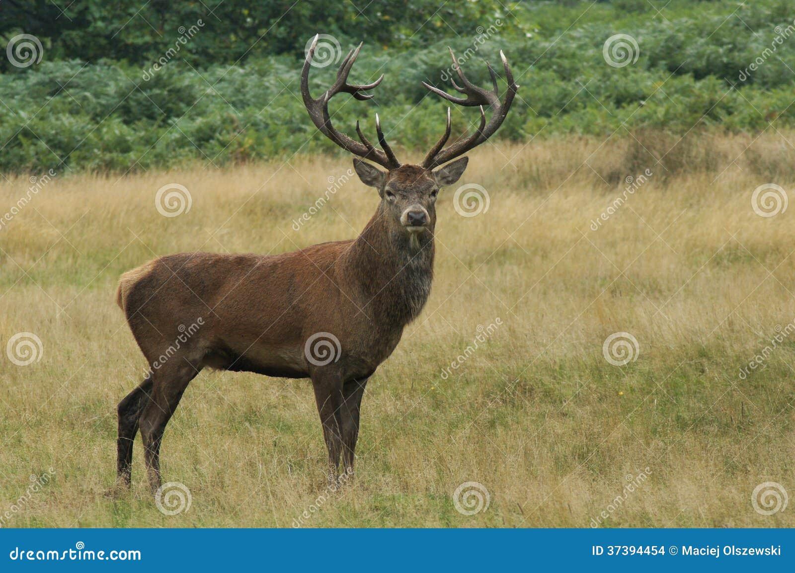 哺乳动物-雷德迪尔