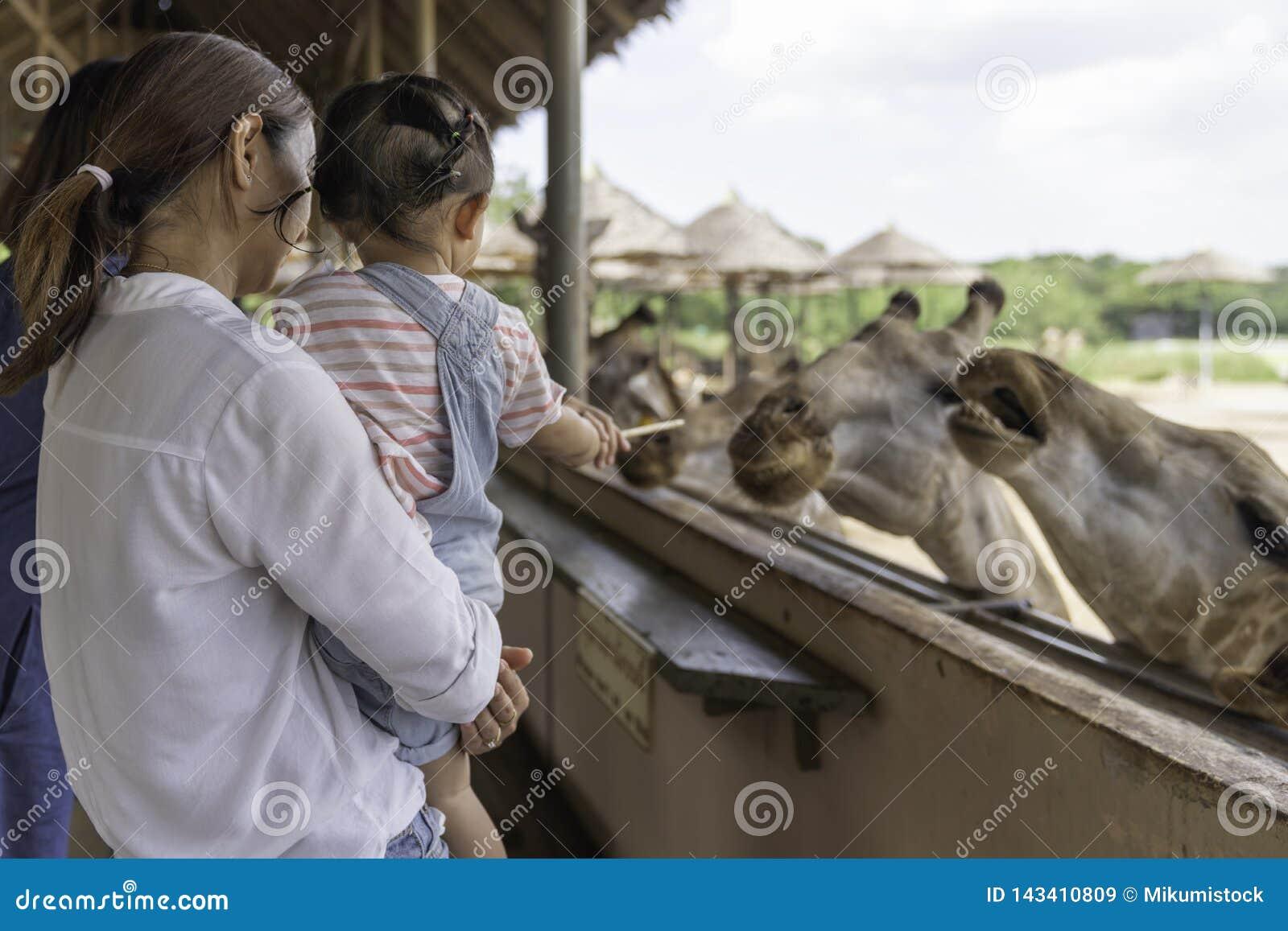 哺养在您的大长颈鹿的手上的亚裔可爱宝贝女孩在动物农场背景中