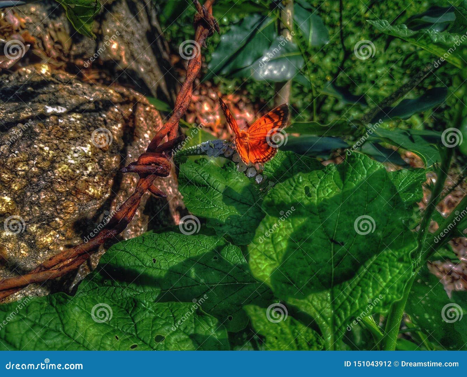 哺养美丽的橙色的蝴蝶晒日光浴和