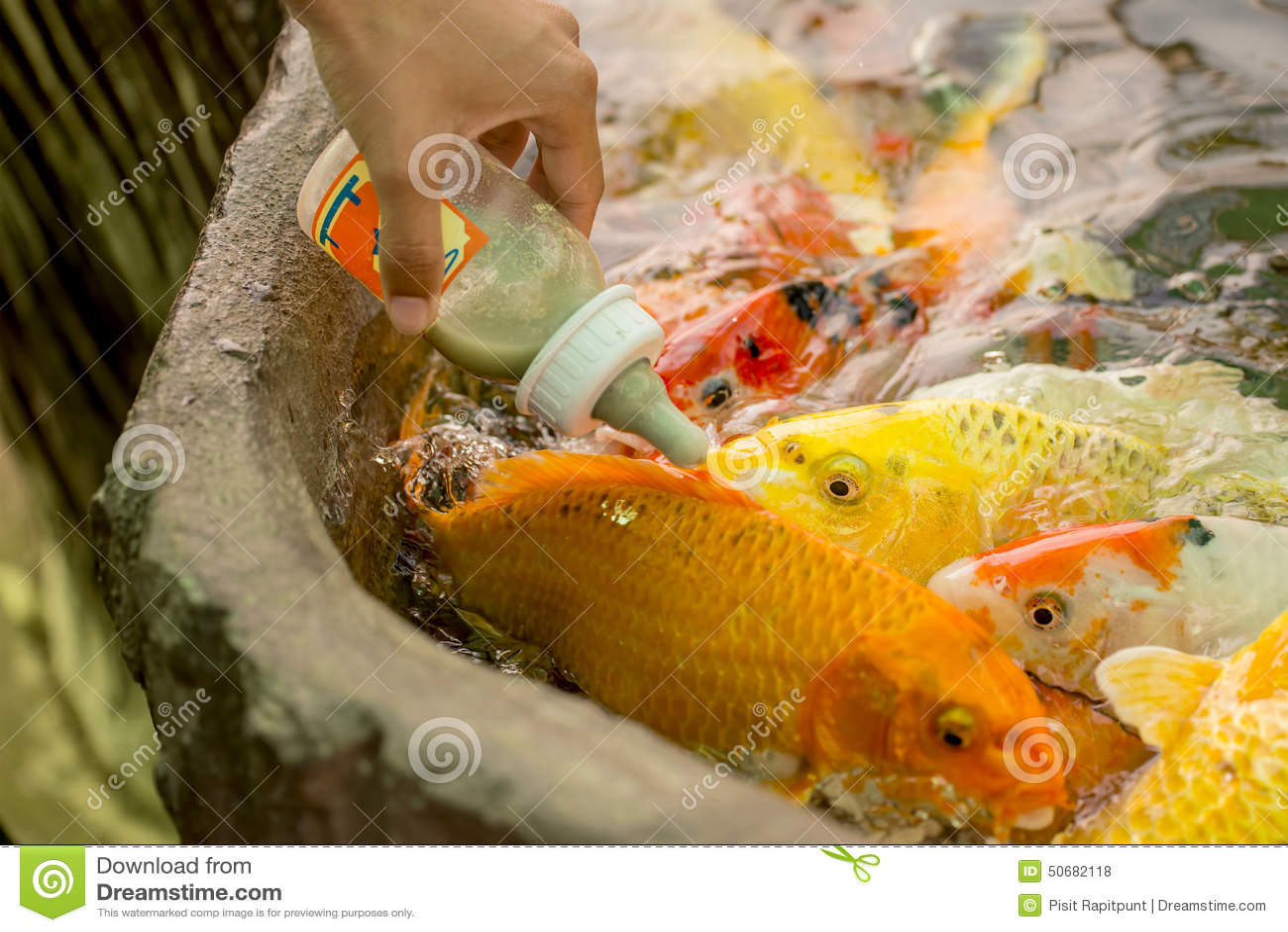 Download 哺养的饥饿的花梢鲤鱼在水池钓鱼 库存照片. 图片 包括有 五颜六色, 饥饿, 室外, 徽章, 食物, 许多 - 50682118