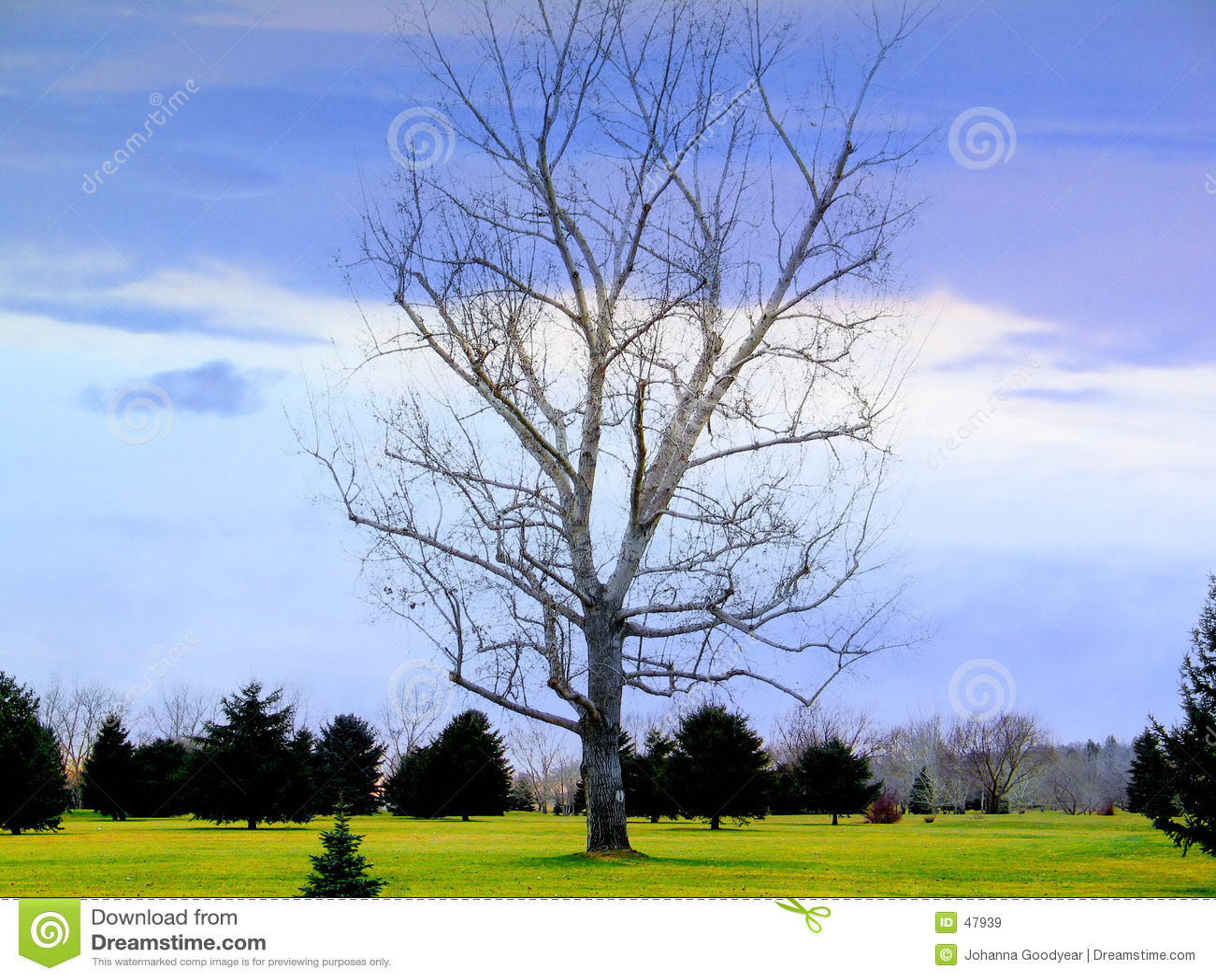 唯一结构树