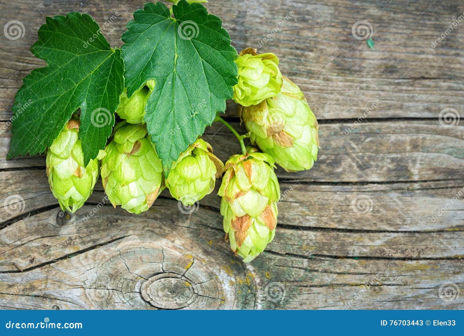 啤酒花球果树