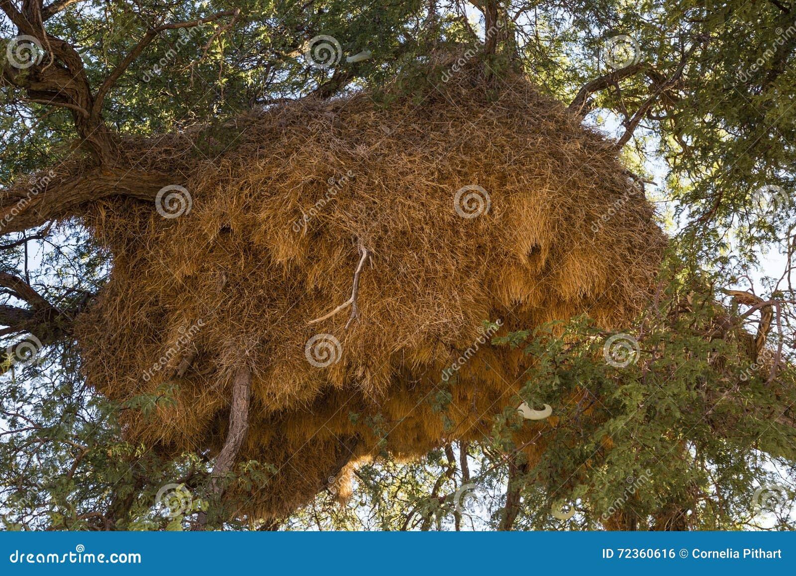 善社交的织布工巢