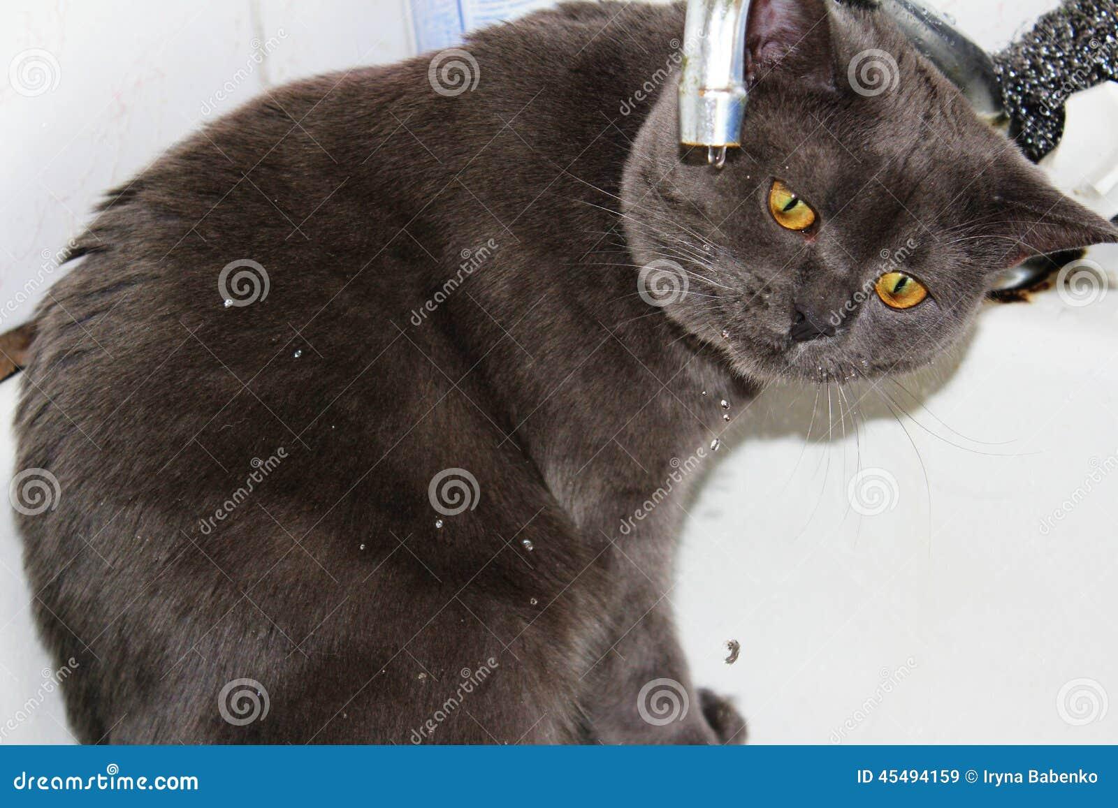 喝从龙头的猫