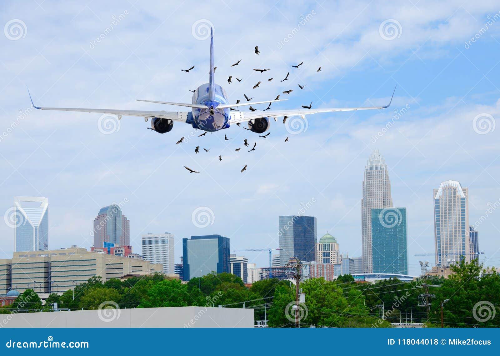 喷气式客机有鸟的班机飞机在它前面在,当离开时