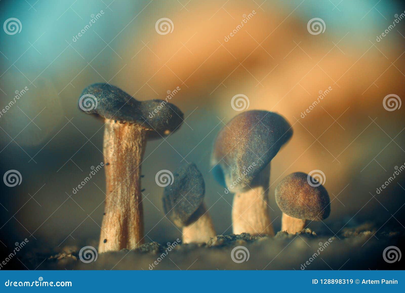 四个蘑菇兄弟抽象自然背景