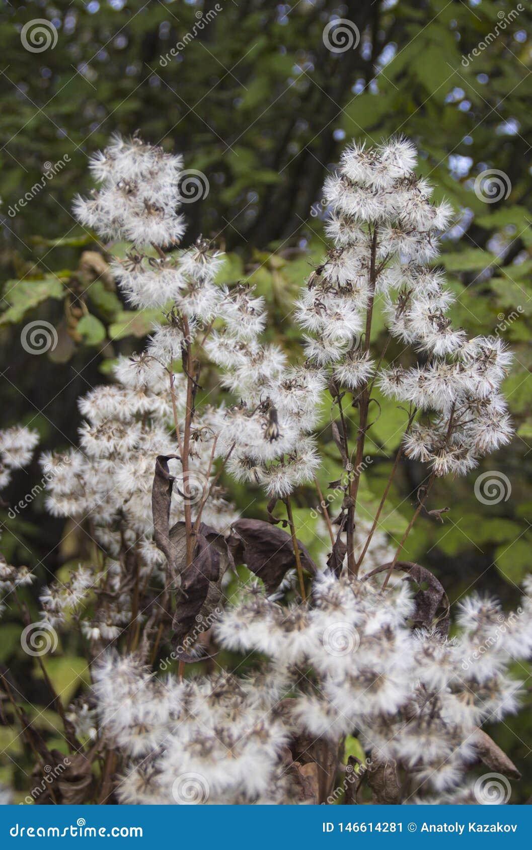 四季不断的草本植物