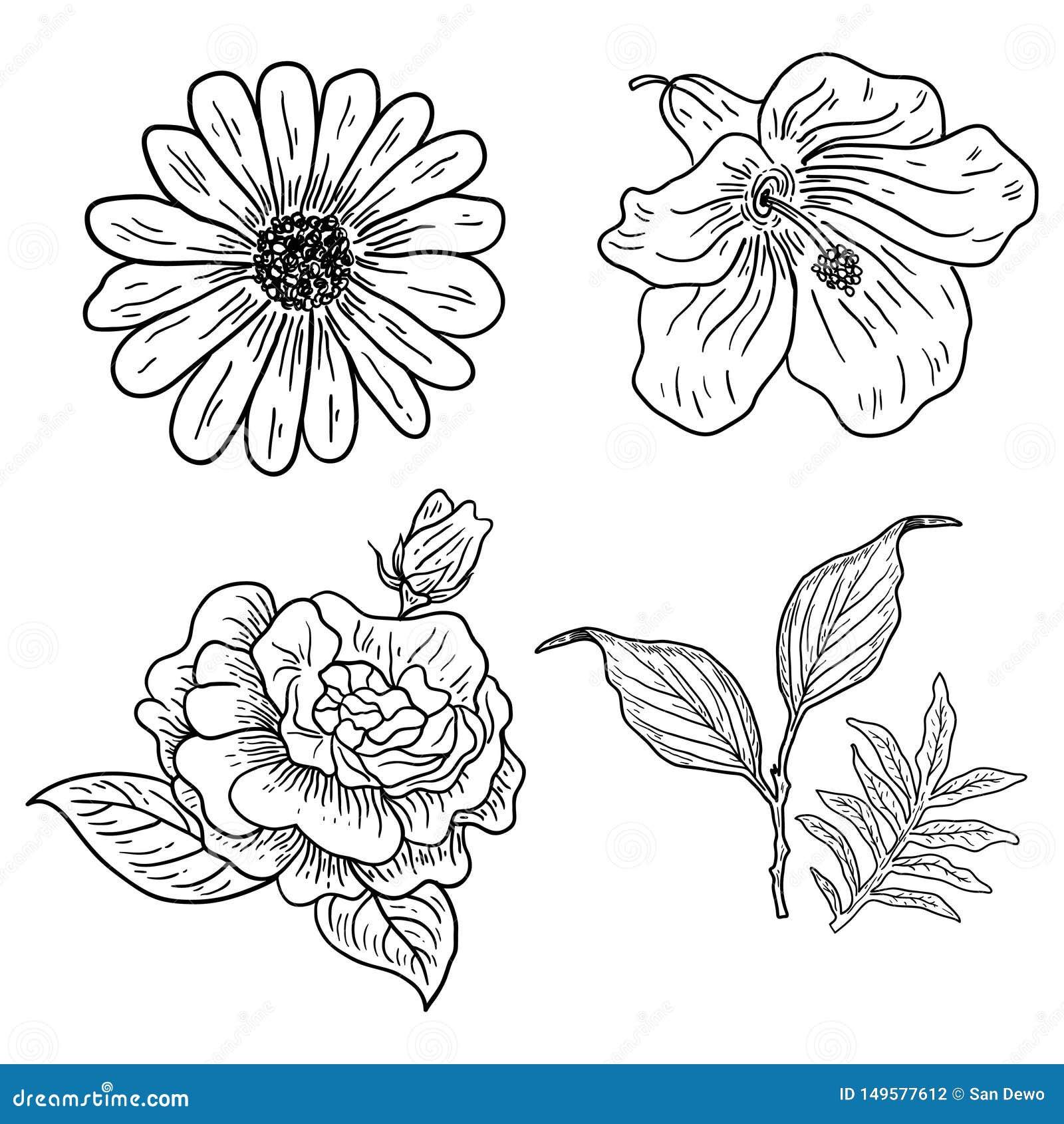 四朵经典花的例证