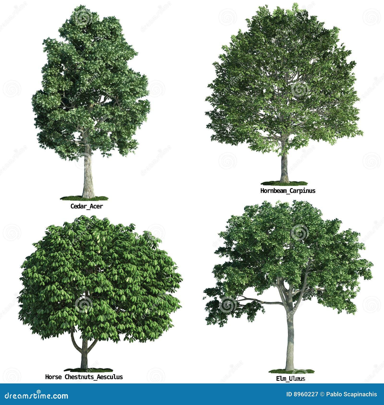 四查出空白纯集的结构树