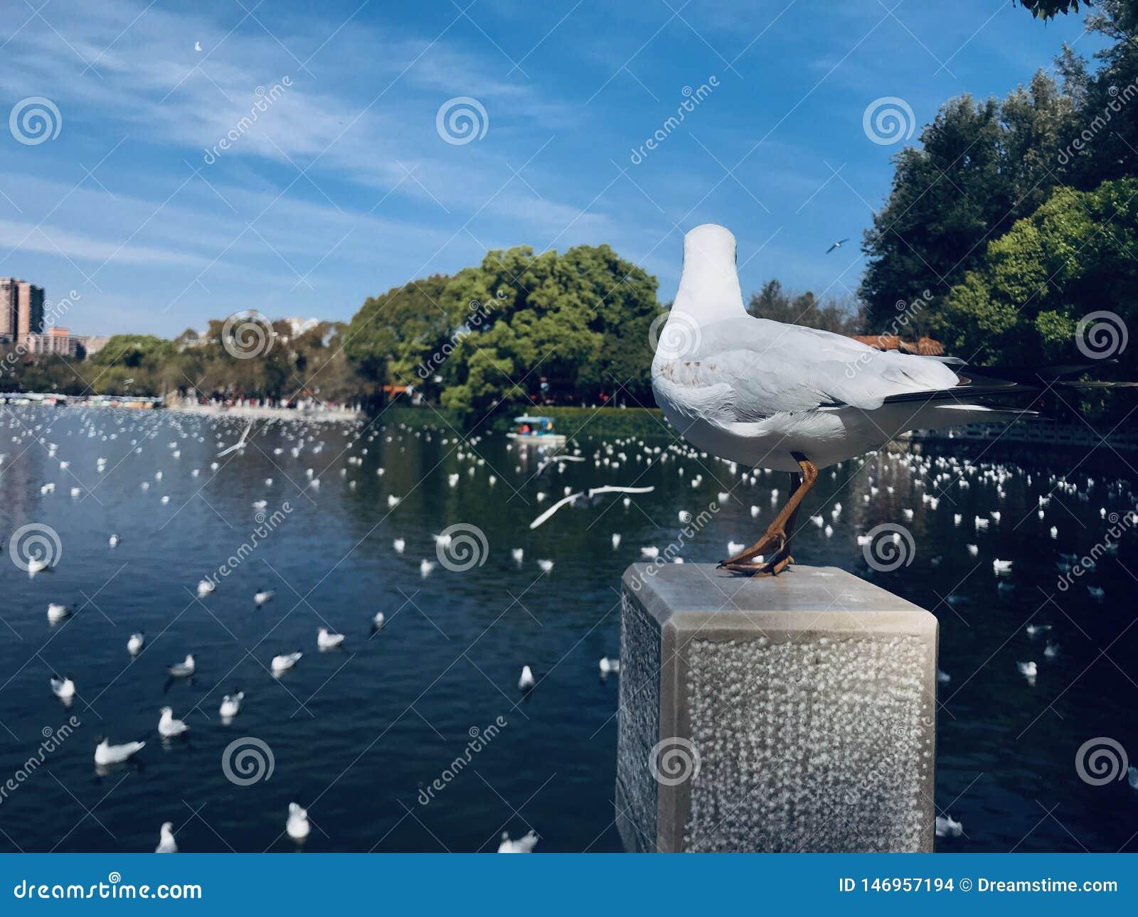 回顾的海鸥,海鸥想法