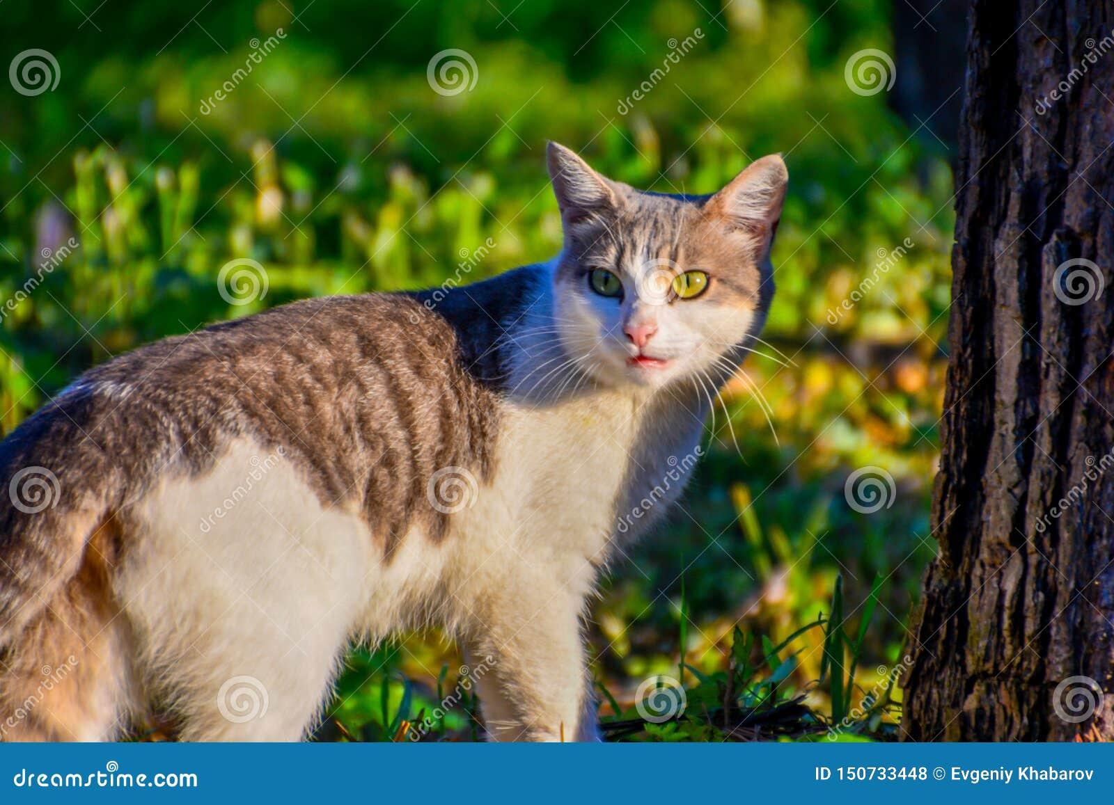 回顾的猫 走和回顾为的猫不会被注意