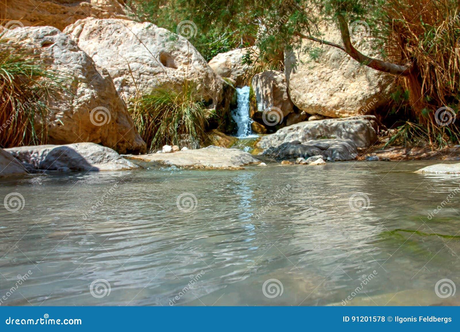 国家公园Ein Gedi