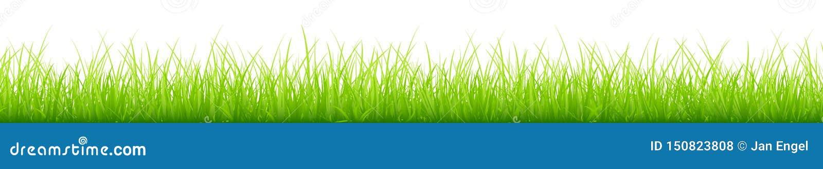 图表绿色草甸不同的高度长的水平的横幅