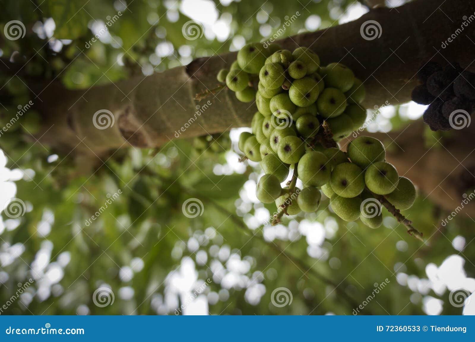 图绿色结构树