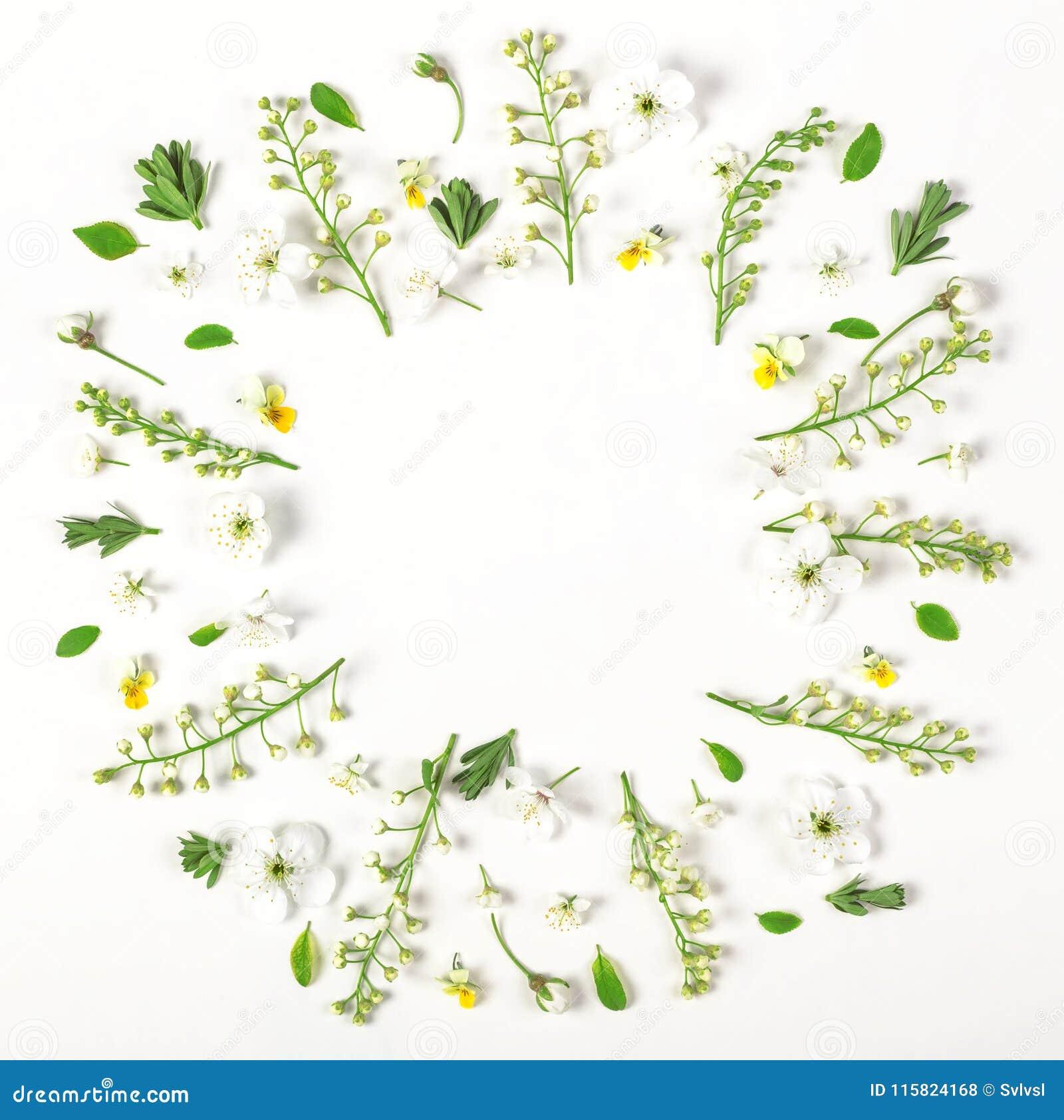 圆的框架花圈由被隔绝的春天花和叶子制成在白色背景 平的位置