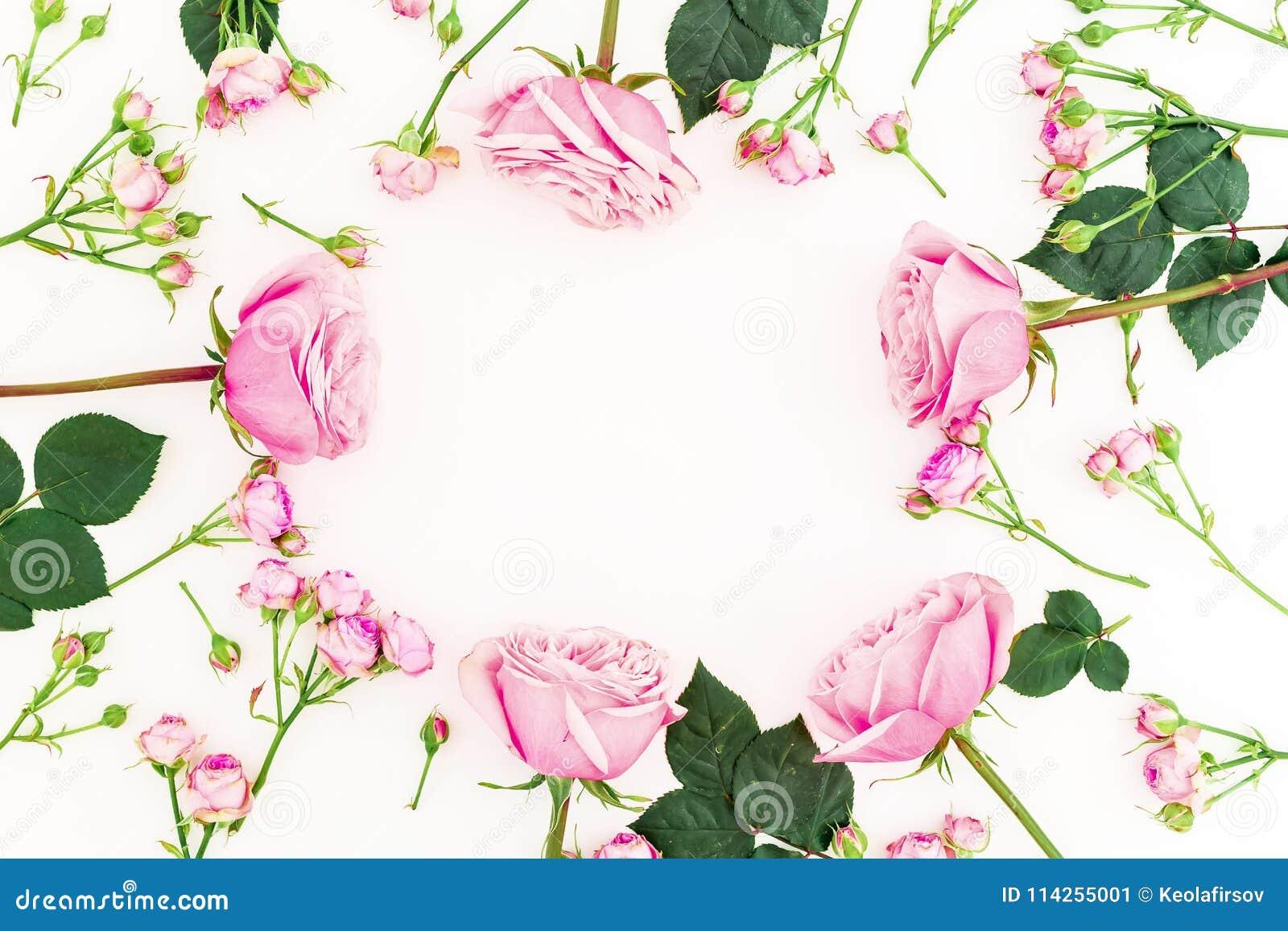 圆的花卉框架由桃红色玫瑰做成在白色背景 平的位置,顶视图 情人节构成