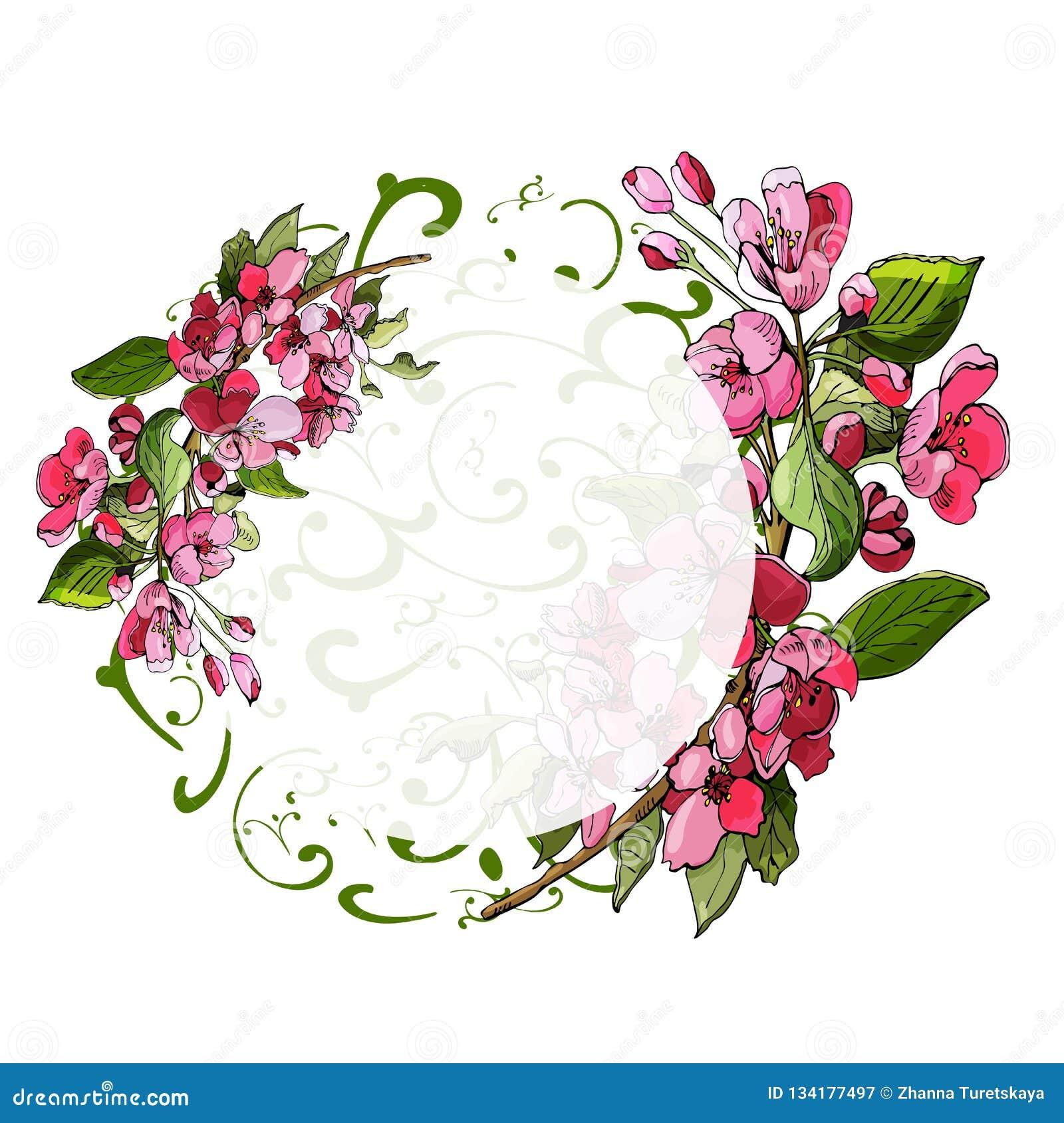 圈子结构的苹果树和花进展的桃红色分支  罗盘星座花手拉的色的剪影