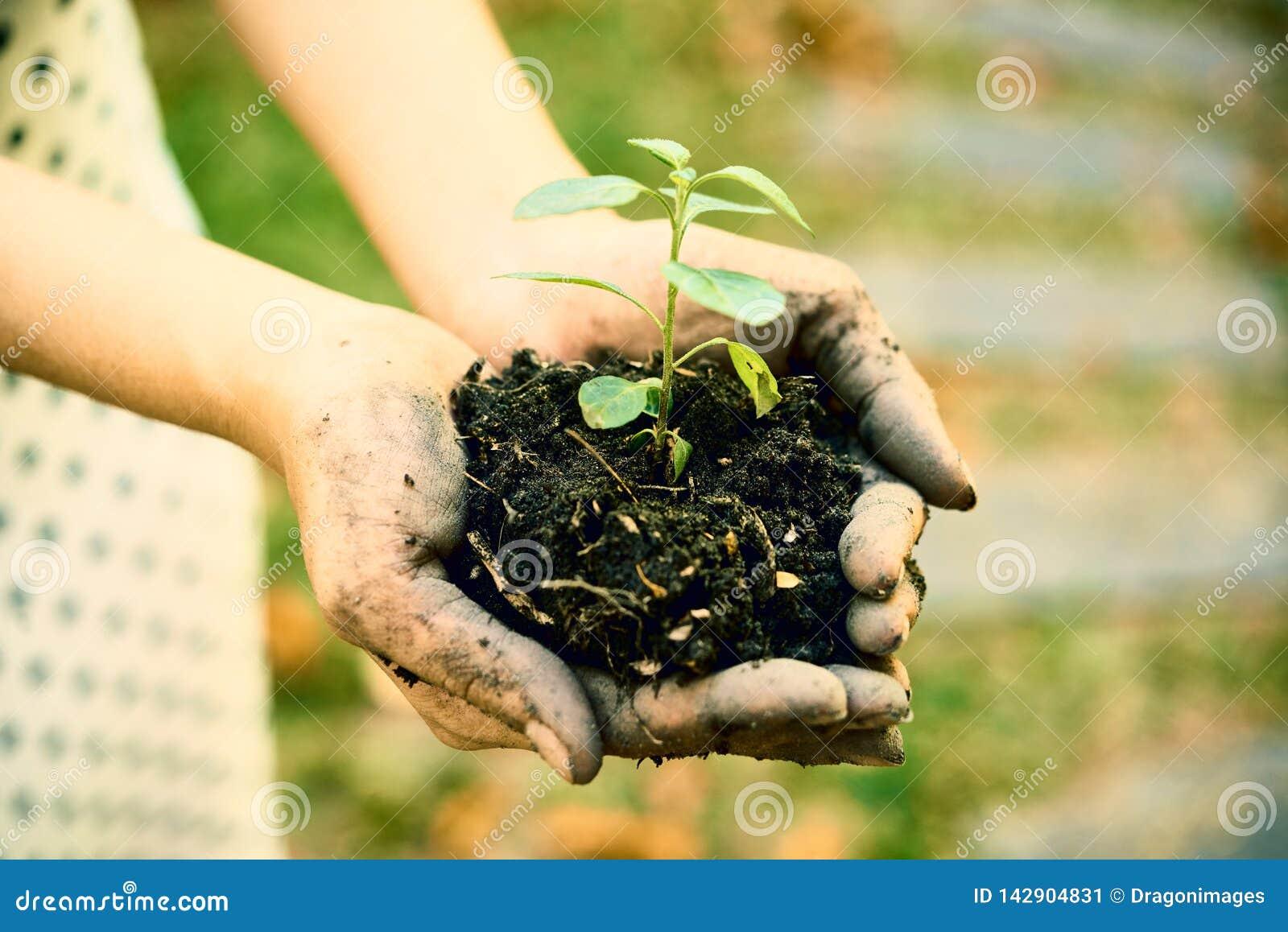 土壤和新芽