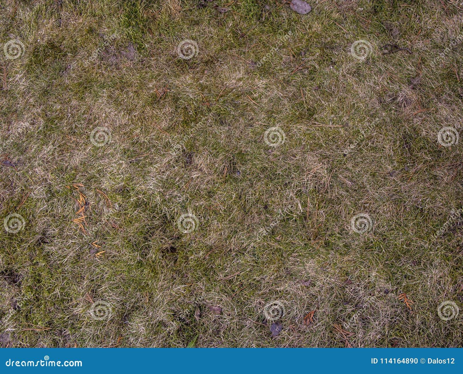 土壤有干草背景 地面的无缝的纹理用干草本