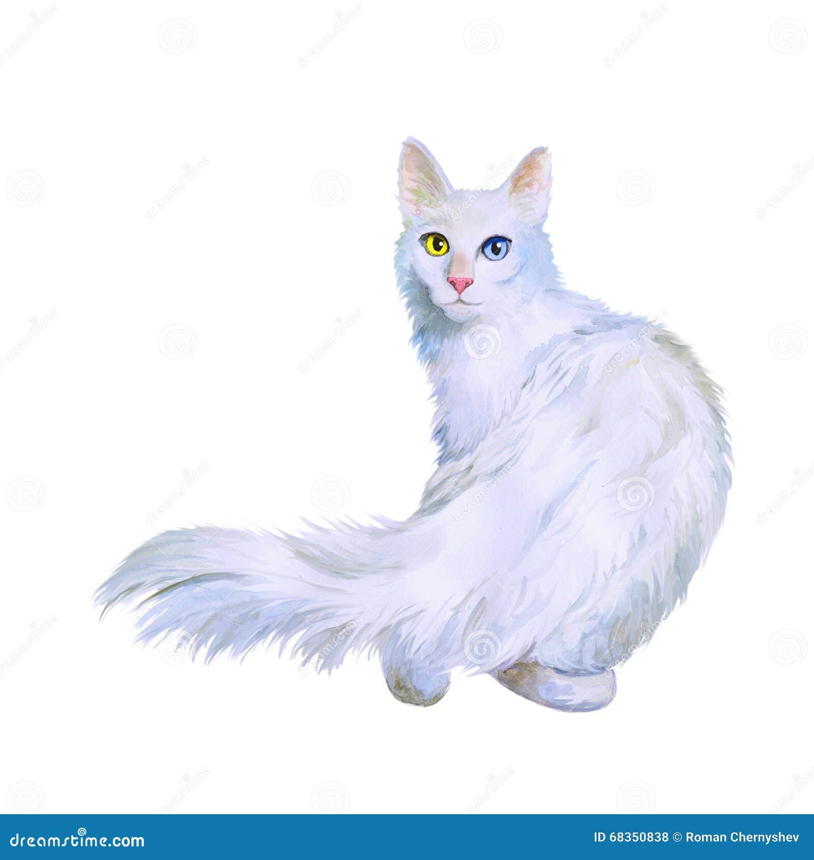 土耳其安哥拉猫猫水彩画象与奇怪的眼睛的在白色背景图片