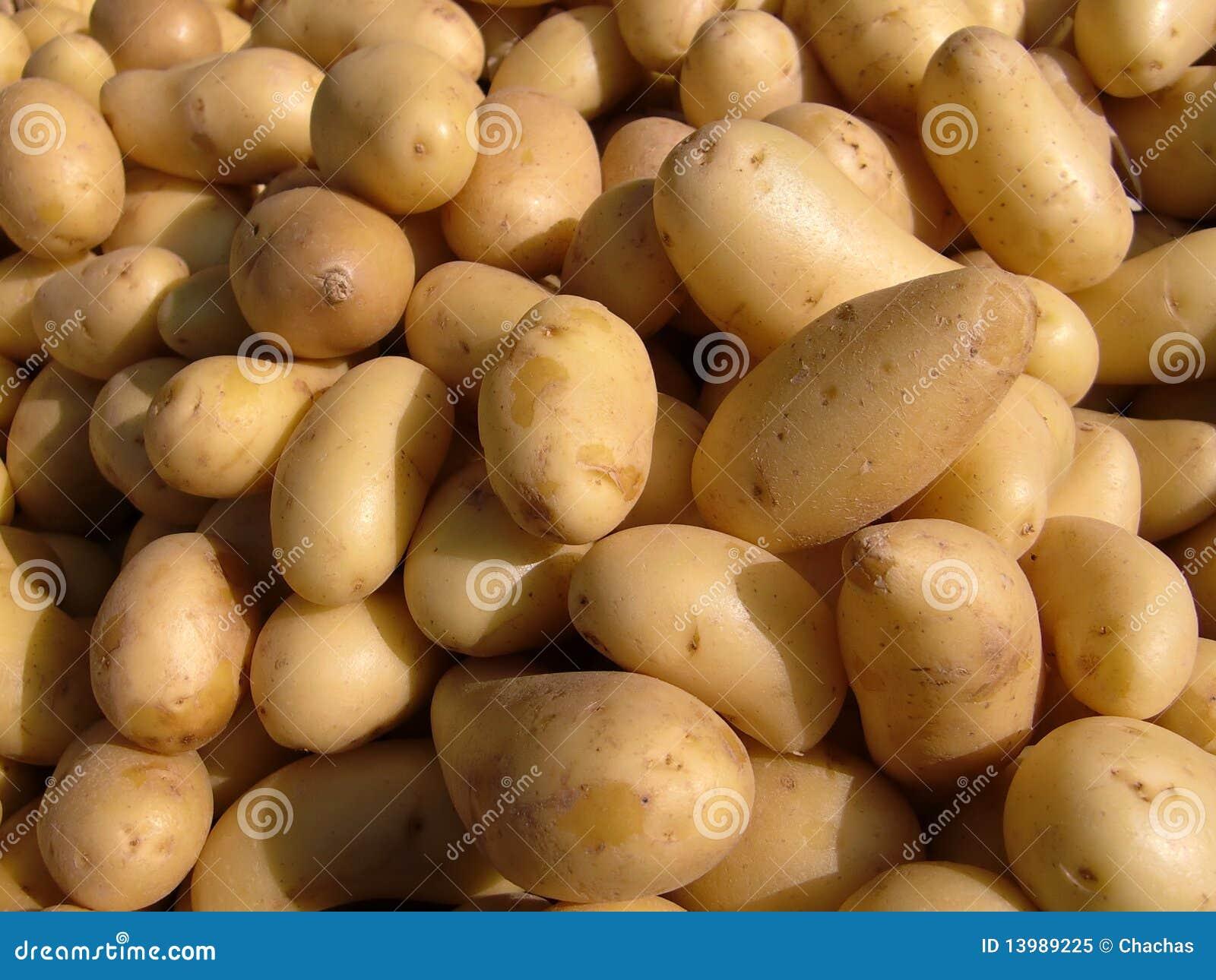 土豆 免版税库存照片 - 图片: 13989225图片