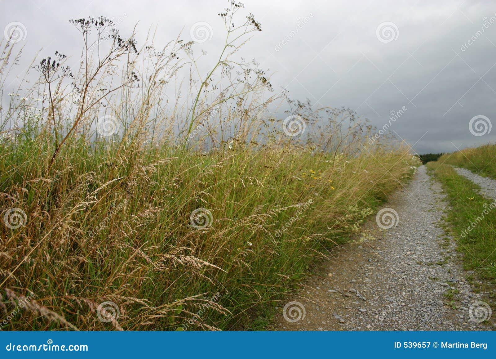 Download 土路 库存图片. 图片 包括有 本质, 击碎, 石头, 结构树, 路径, 草甸, 途径, 天空, 牧场, 蓝色 - 539657