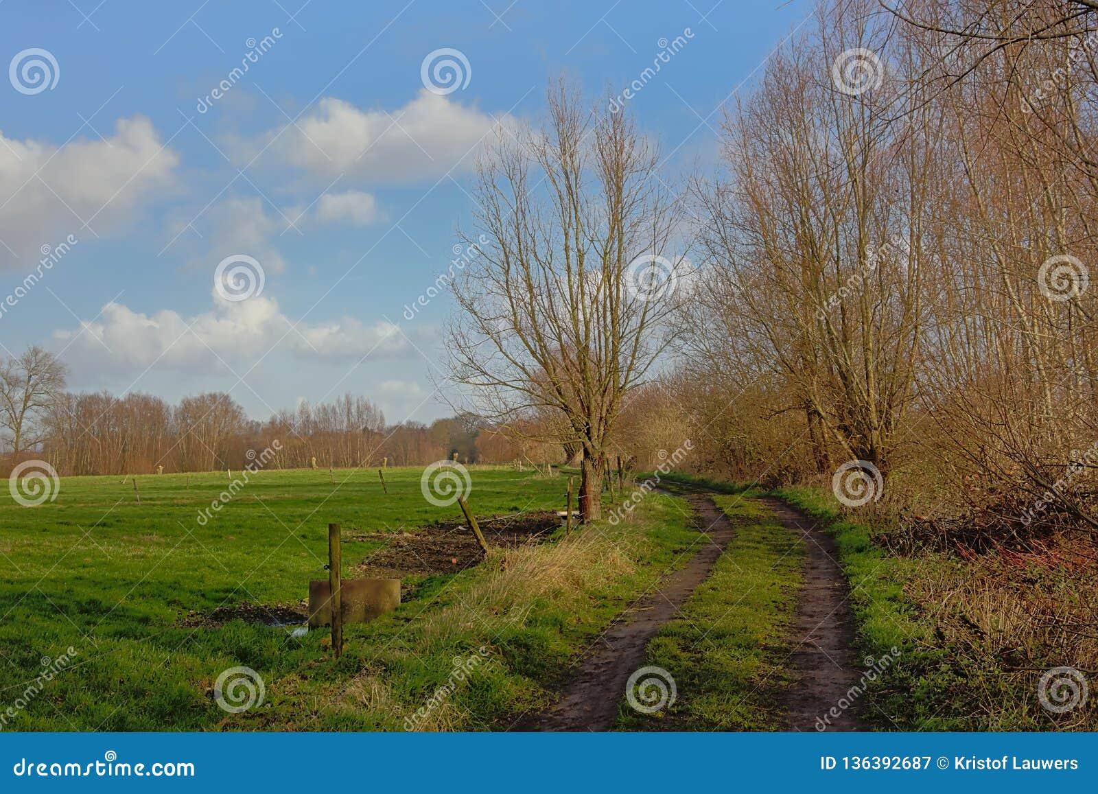 土路thourgh与绿色草甸和被修剪树枝的杨柳的一个风景在富兰德