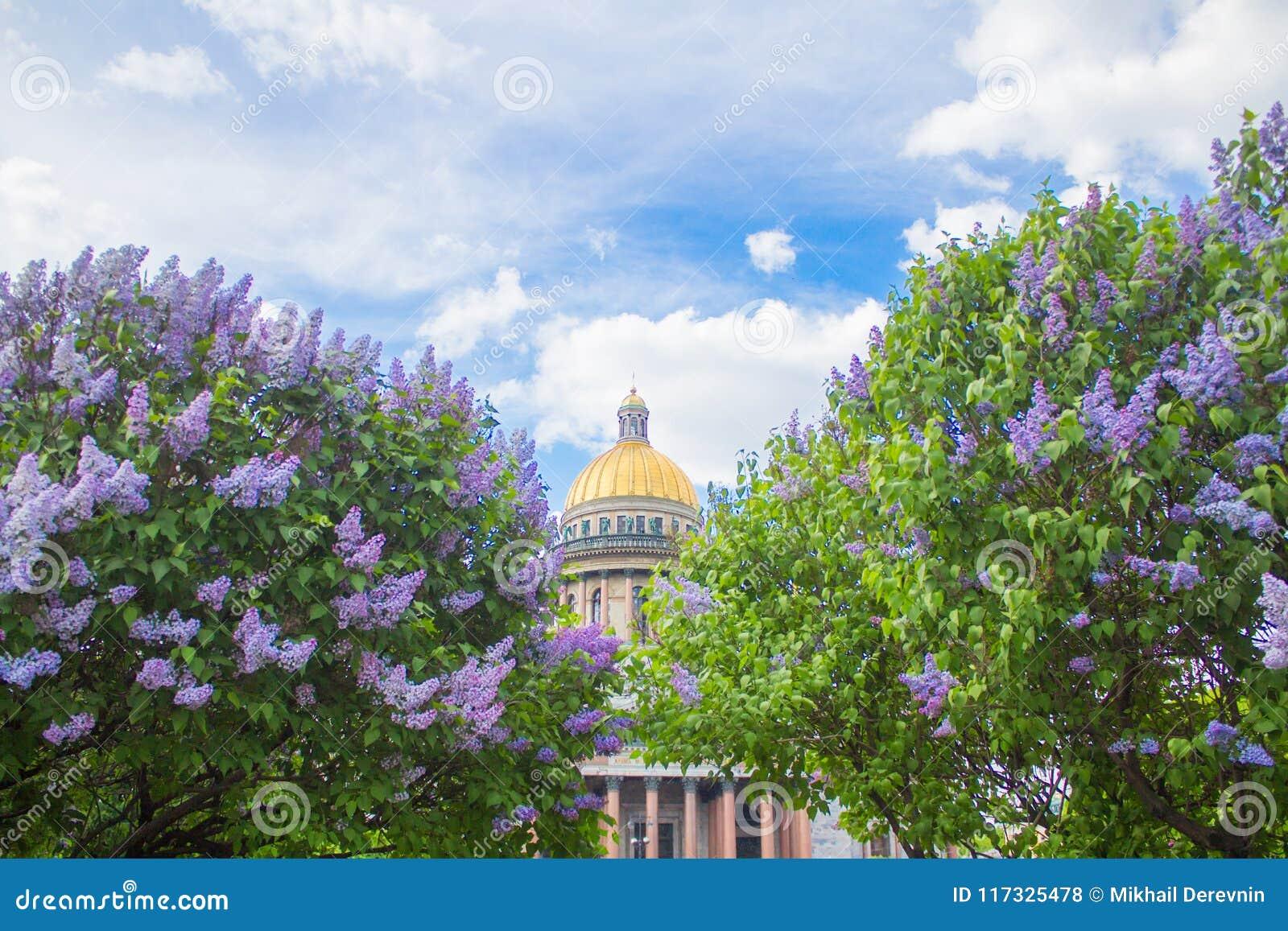 圣徒以撒丁香和苹果树花的` s大教堂