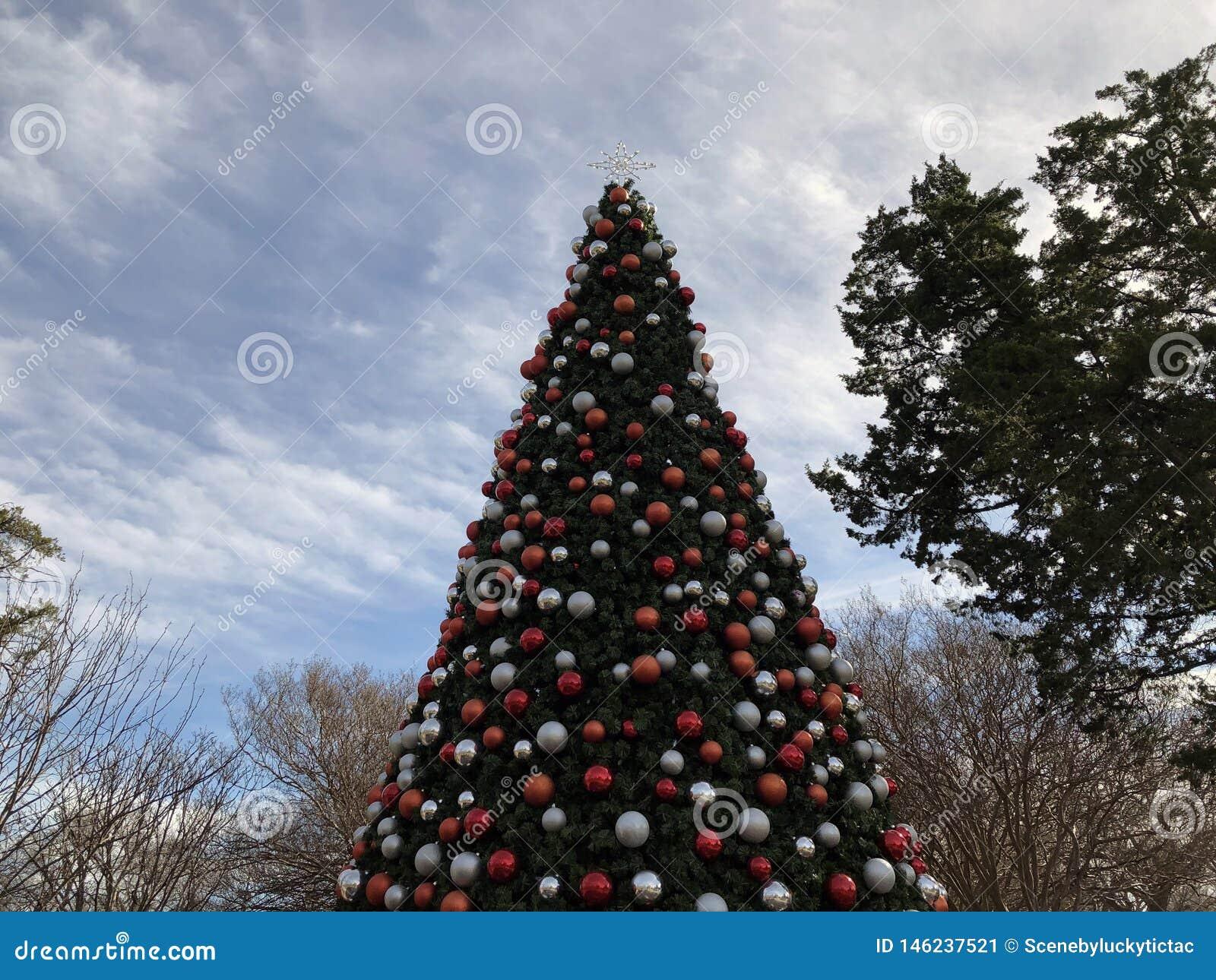 圣诞树在达拉斯得克萨斯