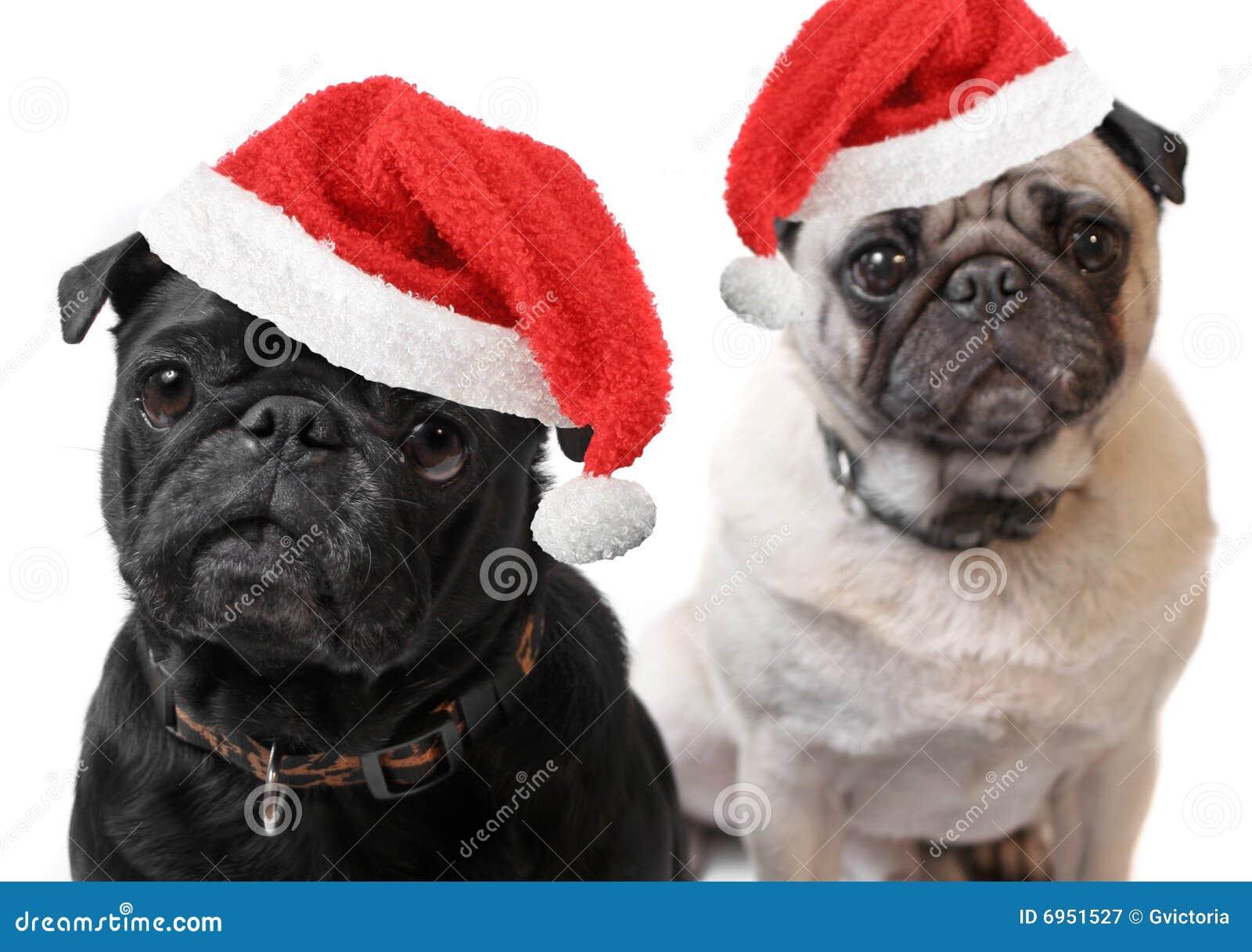 圣诞节哈巴狗