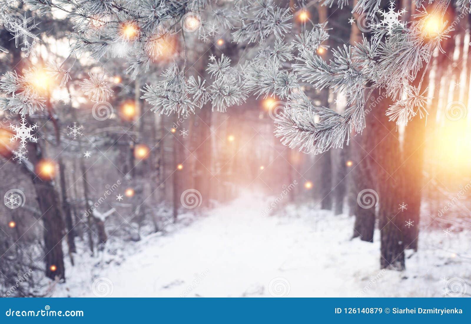 圣诞节森林与光亮的不可思议的雪花的冬天自然 美妙的冬天森林地 另外的背景格式xmas 冷淡的森林