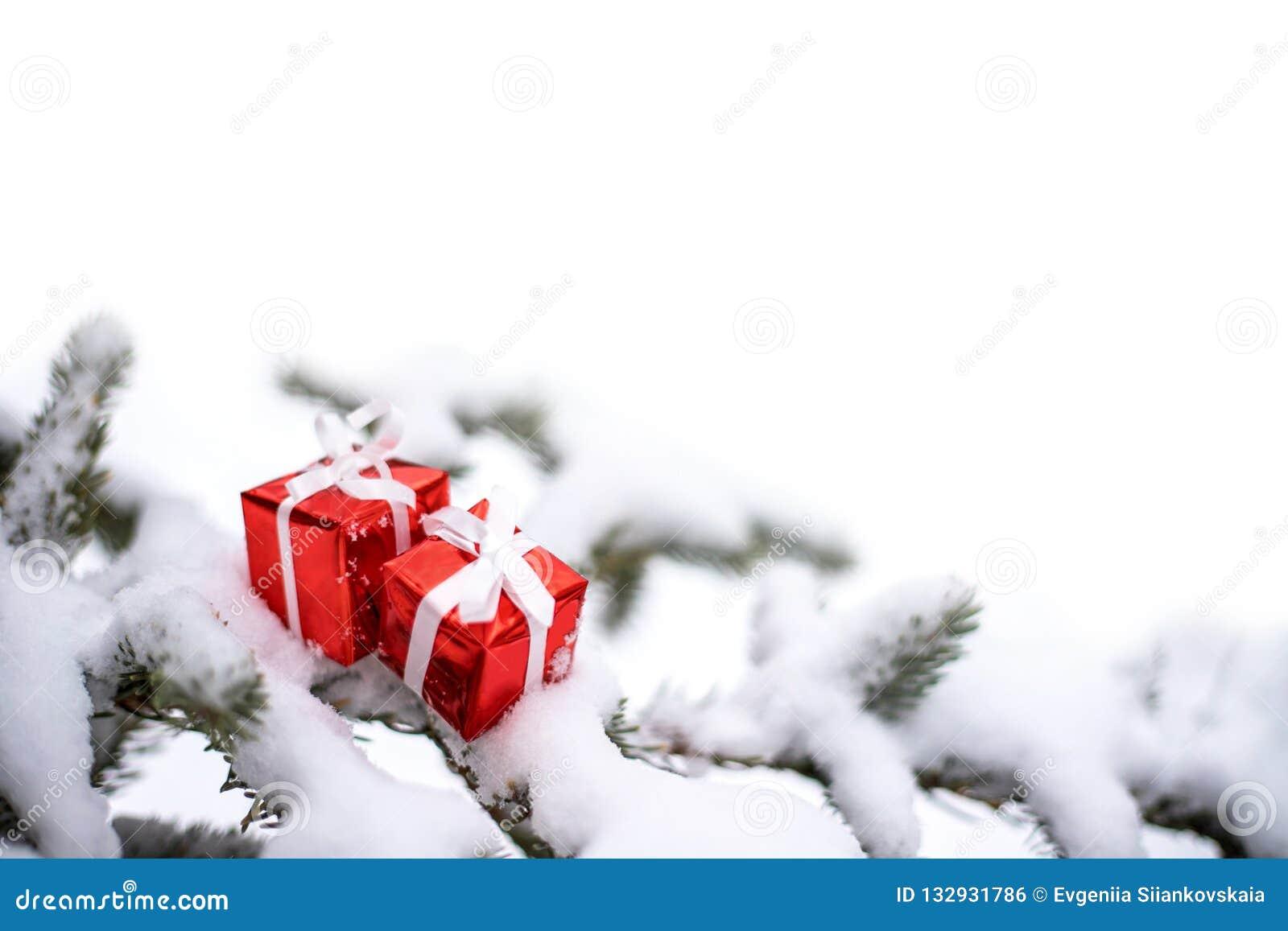 圣诞节礼物盒和雪杉树