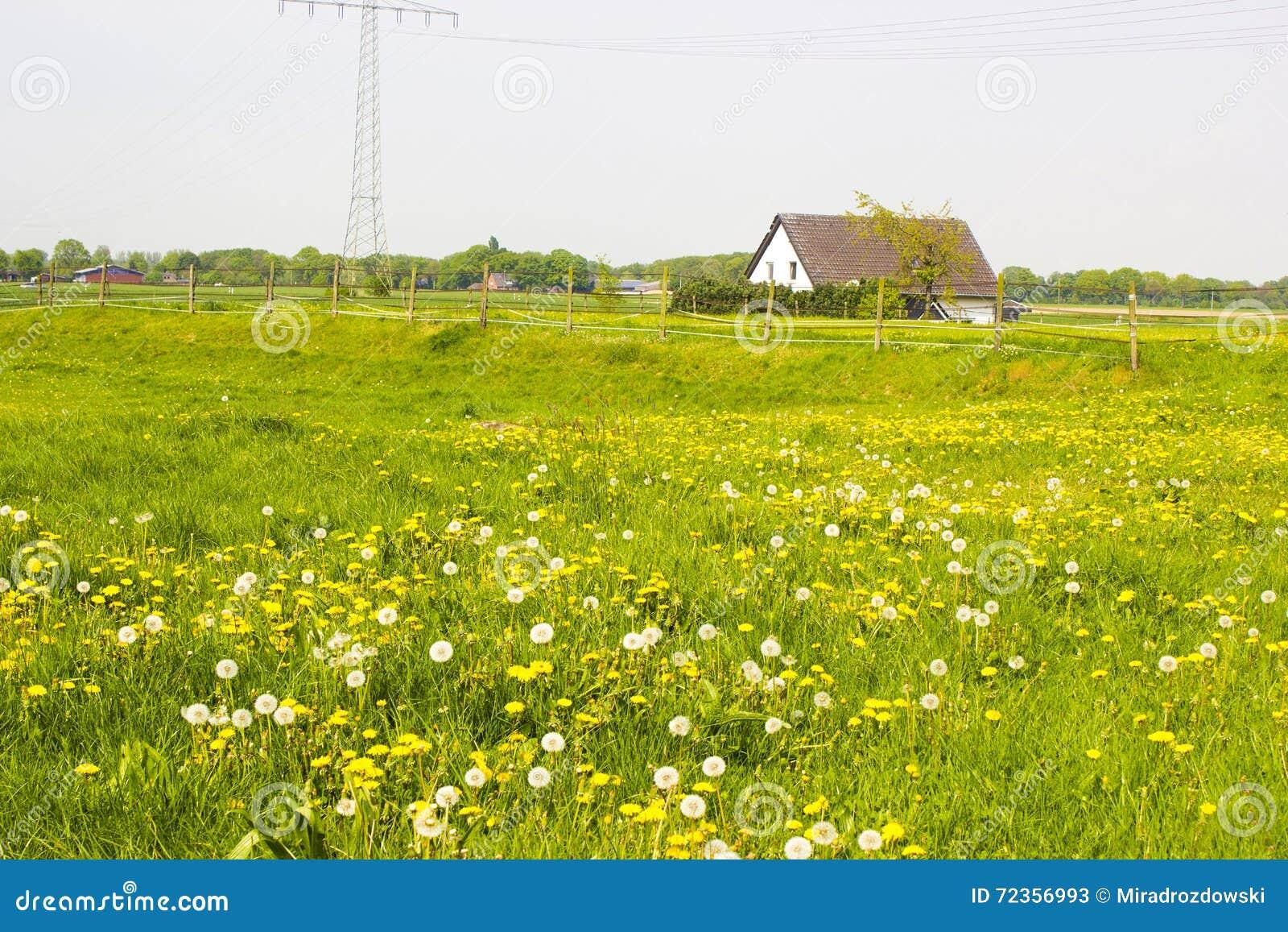 在一个农村房子附近的春天草甸