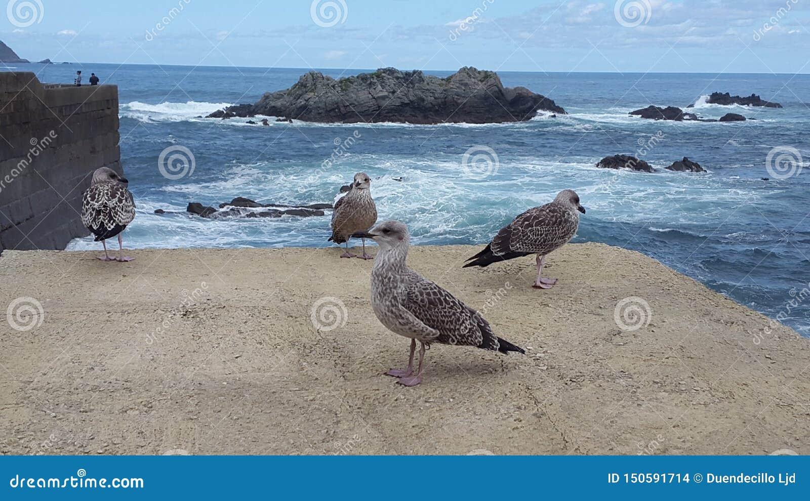 在一个岩石的海鸥与海在背景中