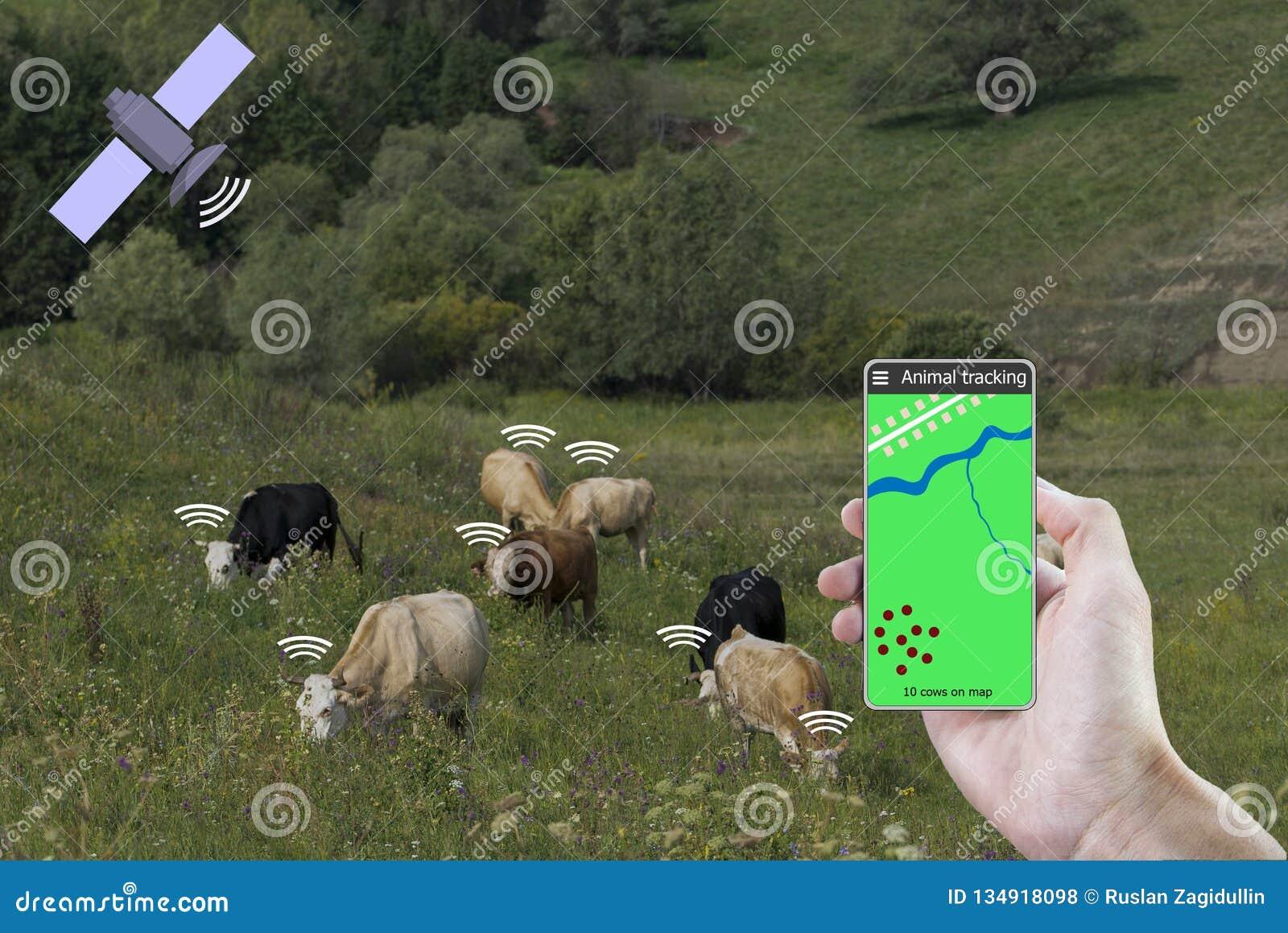 在一个智能手机和一个传感器帮助下在母牛确定母牛的地点 聪明种田