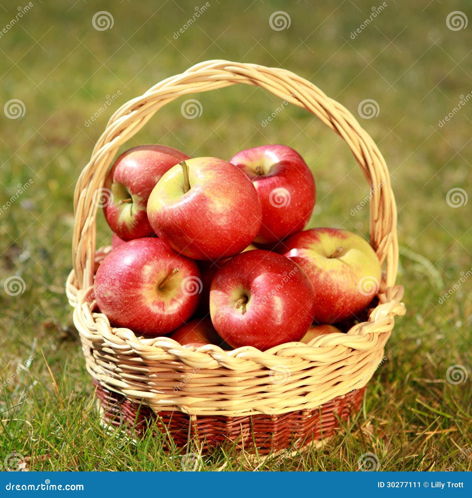 在一个柳条筐的苹果在一棵草,在晚上太阳