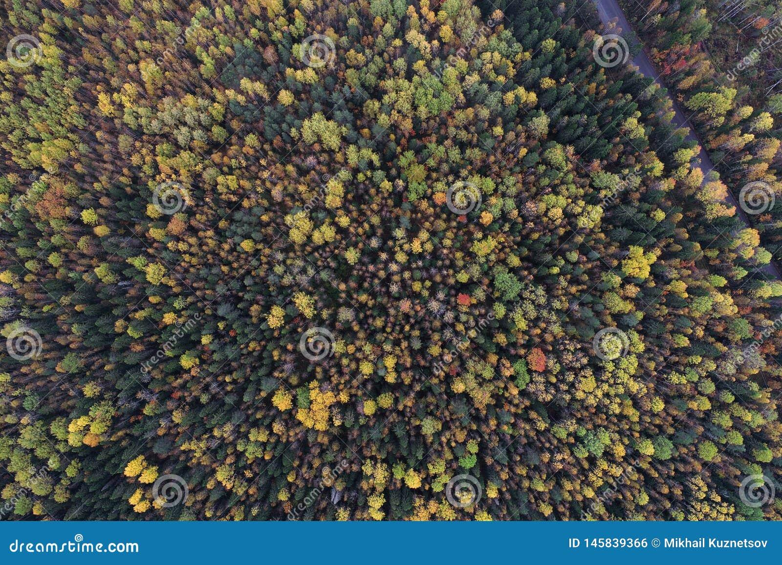 在一个森林的看法的下上面秋天颜色的