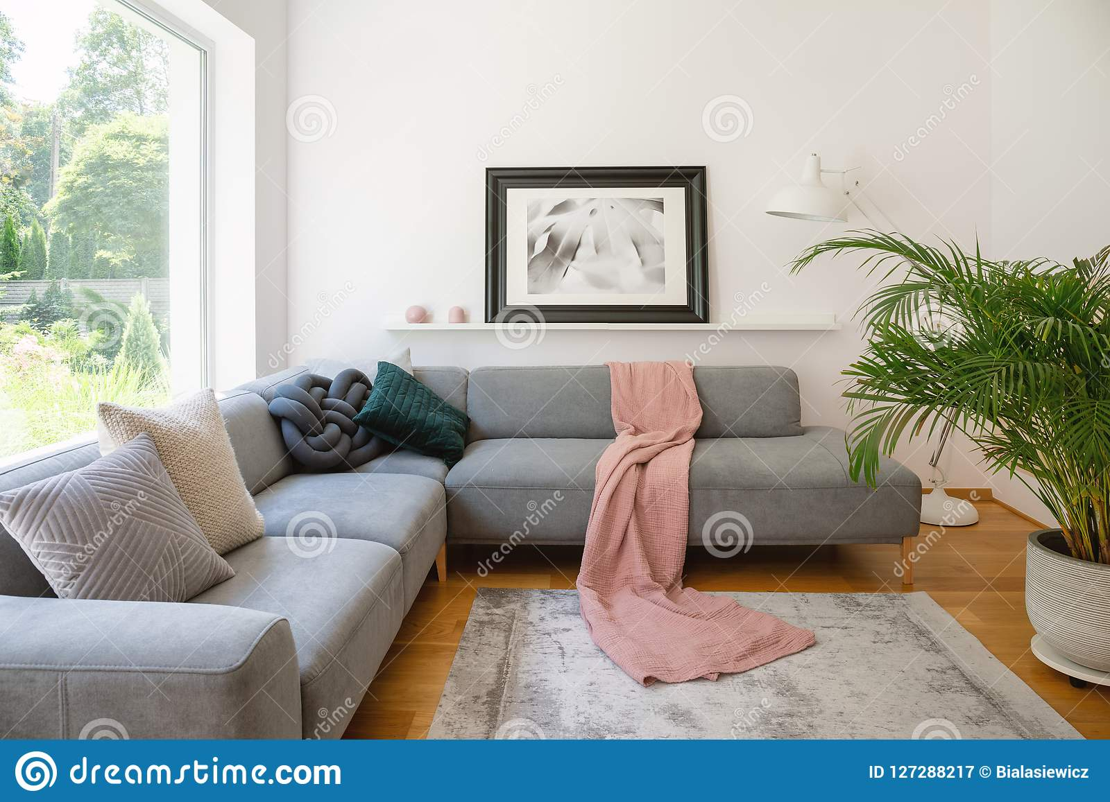 在一个沙发上的被构筑的在白色客厅内部的照片有桃红色毯子的和坐垫与一棵大,绿色棕榈树植物